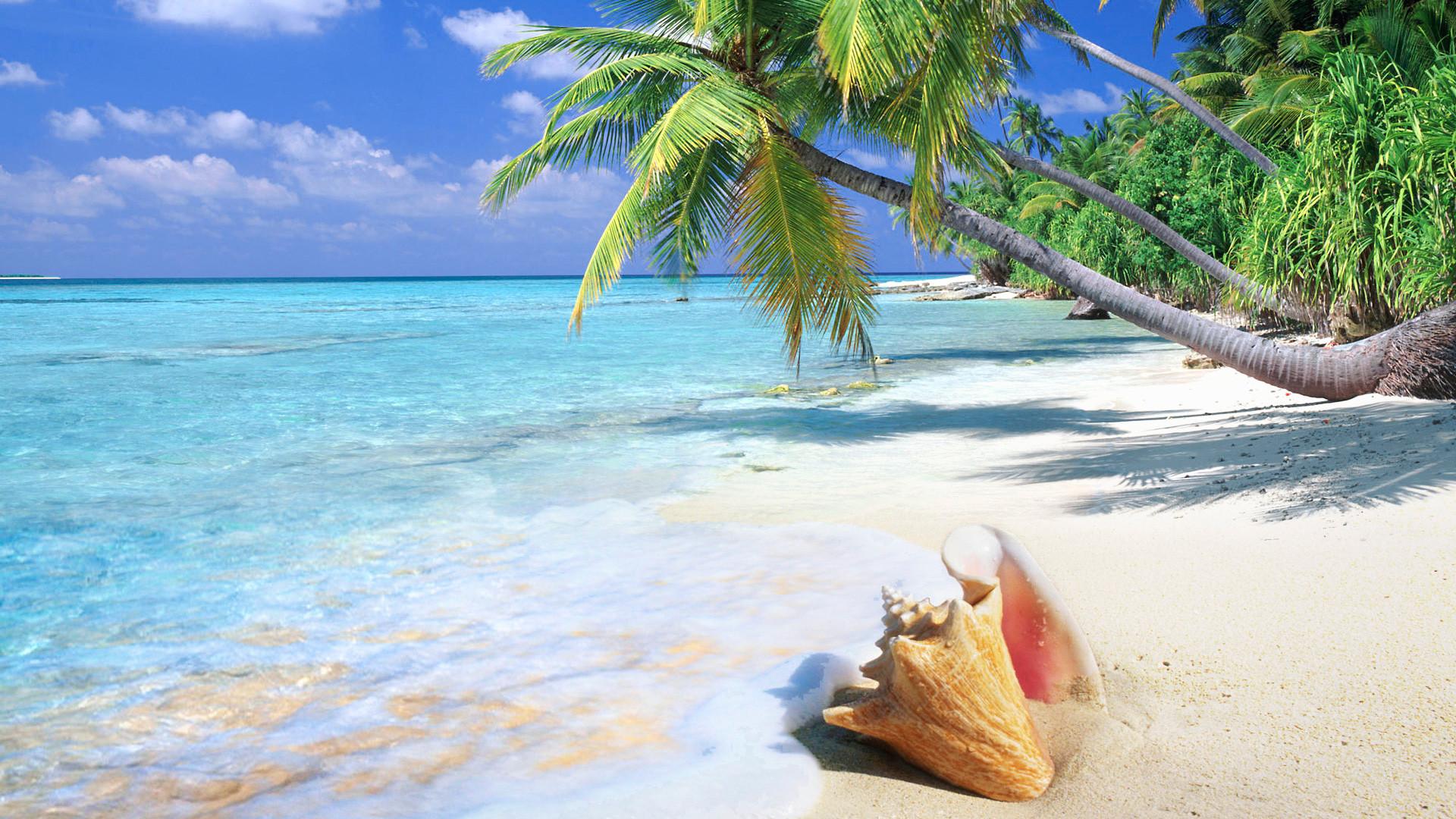 On NMgnCP: FD.998 1366×768 Tropical Beach, 892.95 Kb