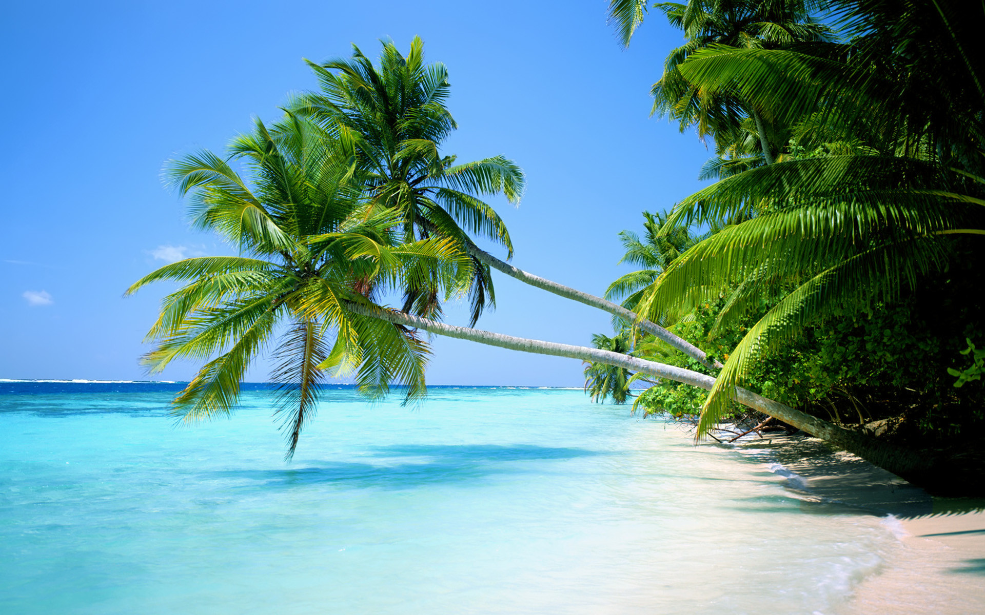 Palm Trees Wallpaper (42 Wallpapers)