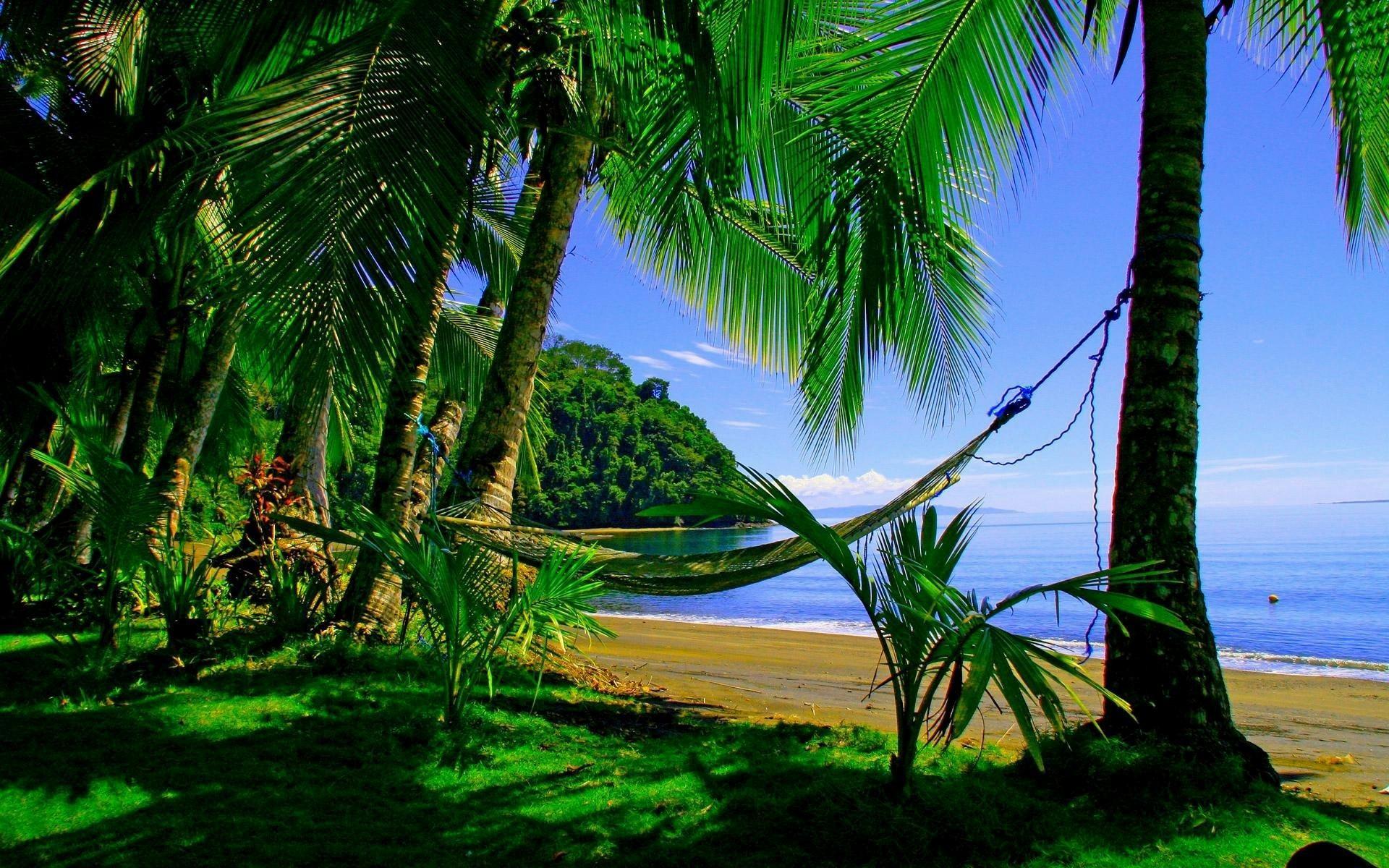wallpaper.wiki-Wallpaper-puerto-beaches-palms-summer-green-