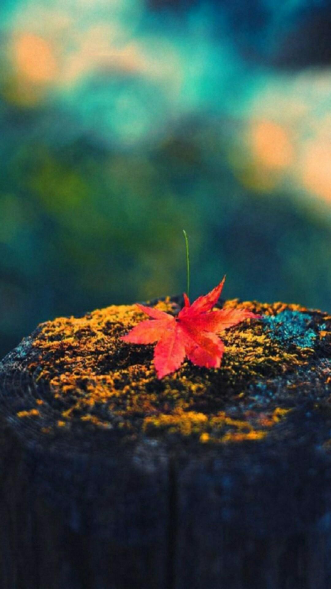 Maple leaf cellphone wallpaper lock screen, Fall, Autumn leaves, moss, tree  stump