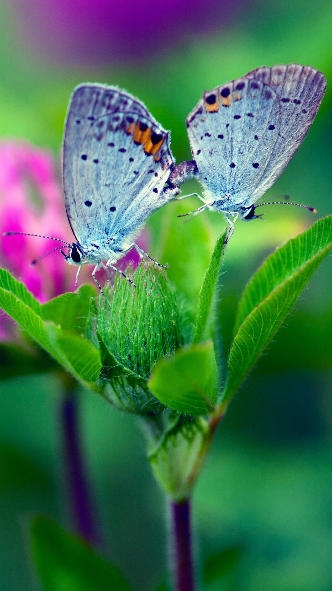 Android Butterfly Wallpaper HD