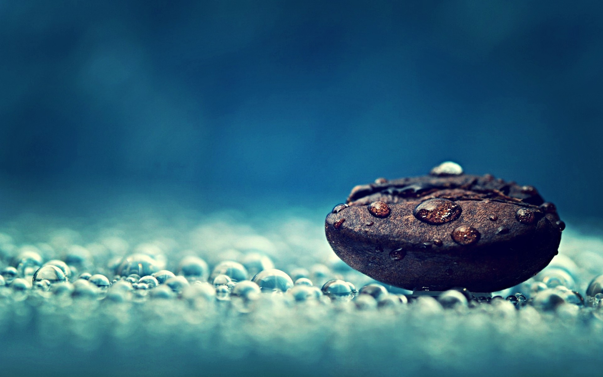 Coffee bean water drops close-up macro photography Free HD Wallpaper