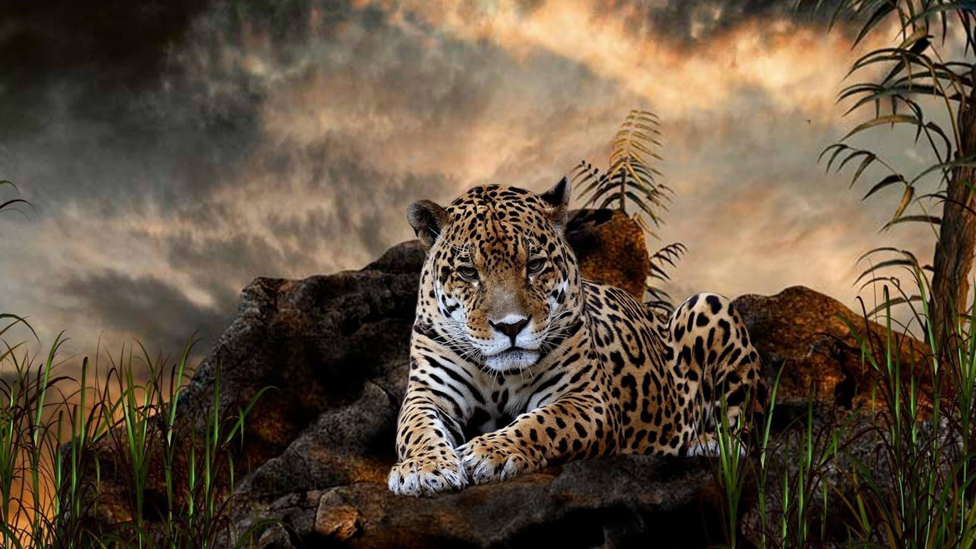 Wild-Leopard-Wallpaper-Full-HD-1080P
