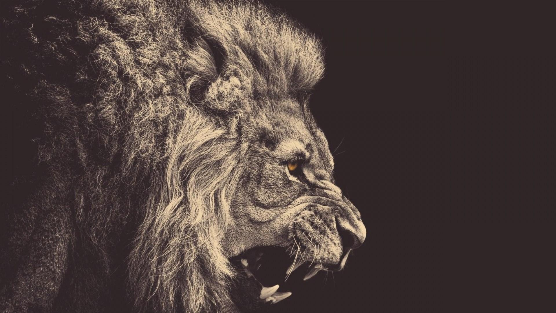 Preview wallpaper lion, mane, big cat, grin 1920×1080