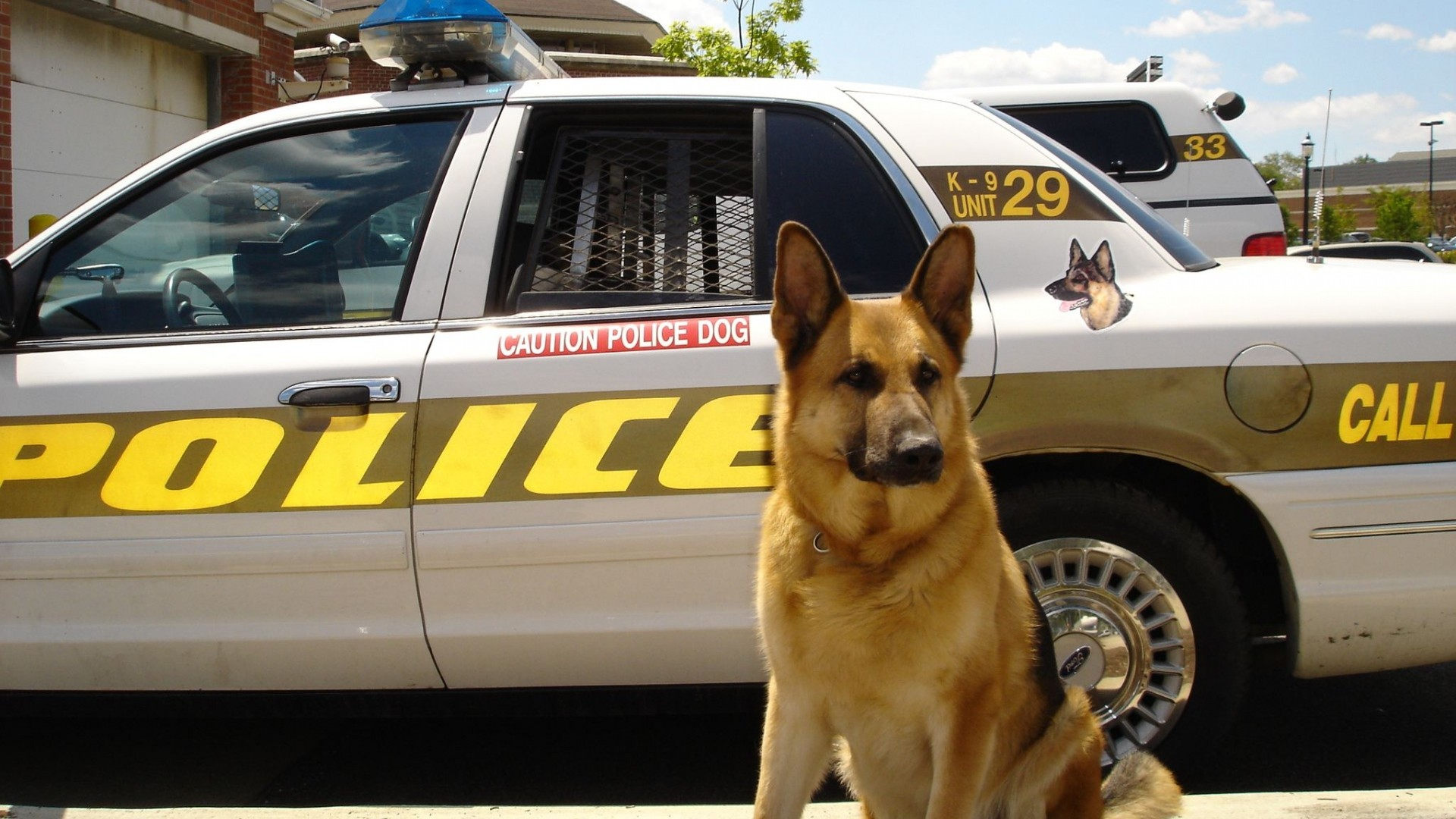 Get the latest dog, sheepdog, police news, pictures and videos and learn  all about dog, sheepdog, police from wallpapers4u.org, your wallpaper news  source.