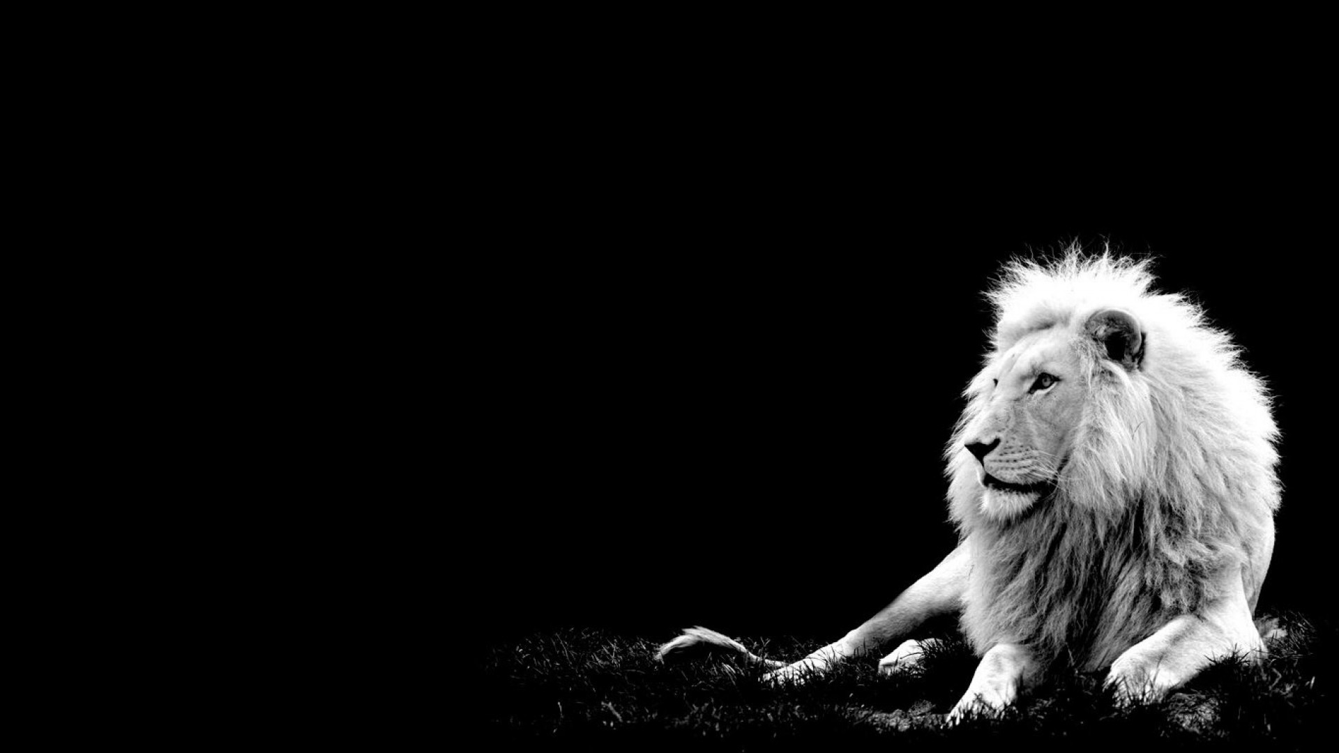 Lion Wallpaper HD Pictures One HD Wallpaper Pictures Backgrounds Lion Image  Wallpapers Wallpapers)