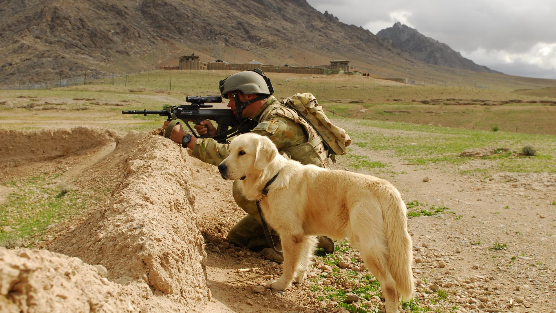 dog, sheepdog, war