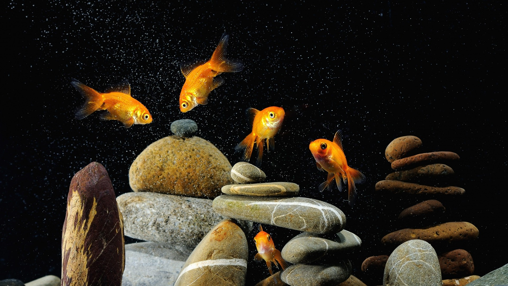 Preview wallpaper fish, aquarium, rocks, black background 1920×1080