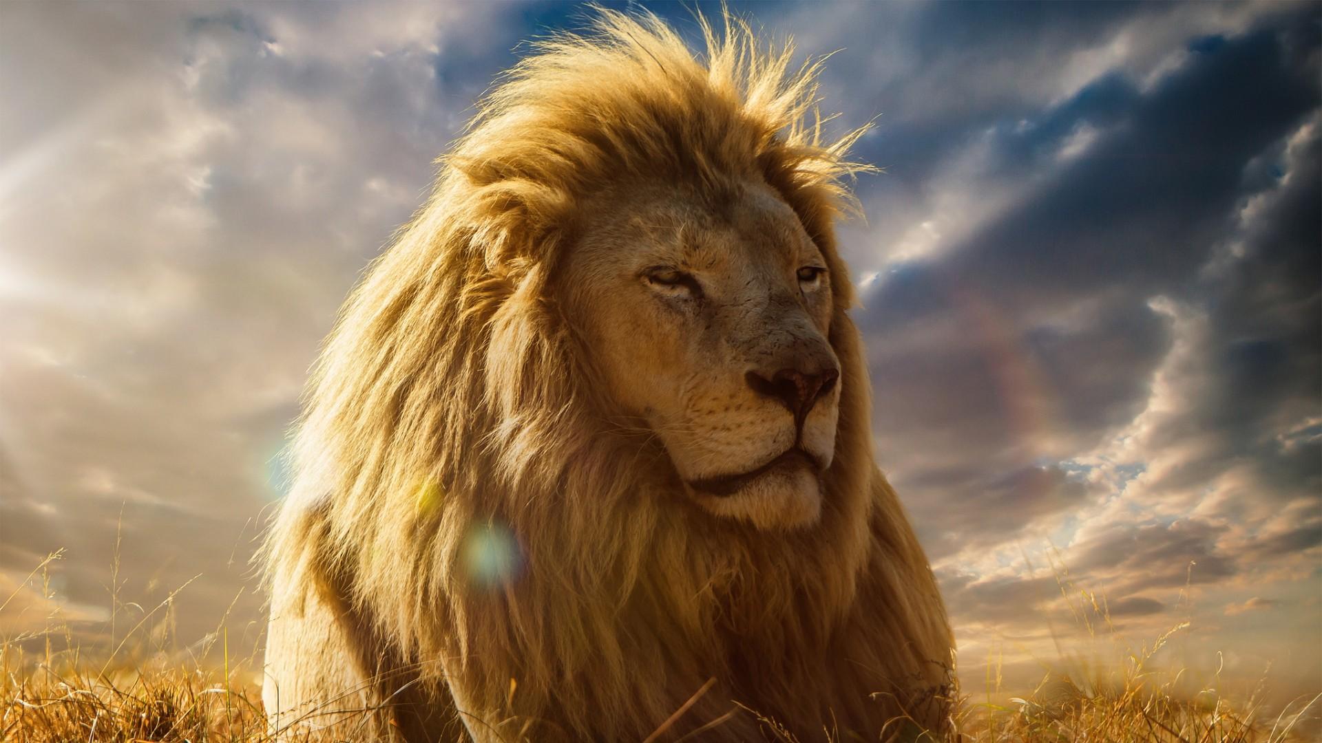 Preview wallpaper lion, king of beasts, mane, savannah 1920×1080