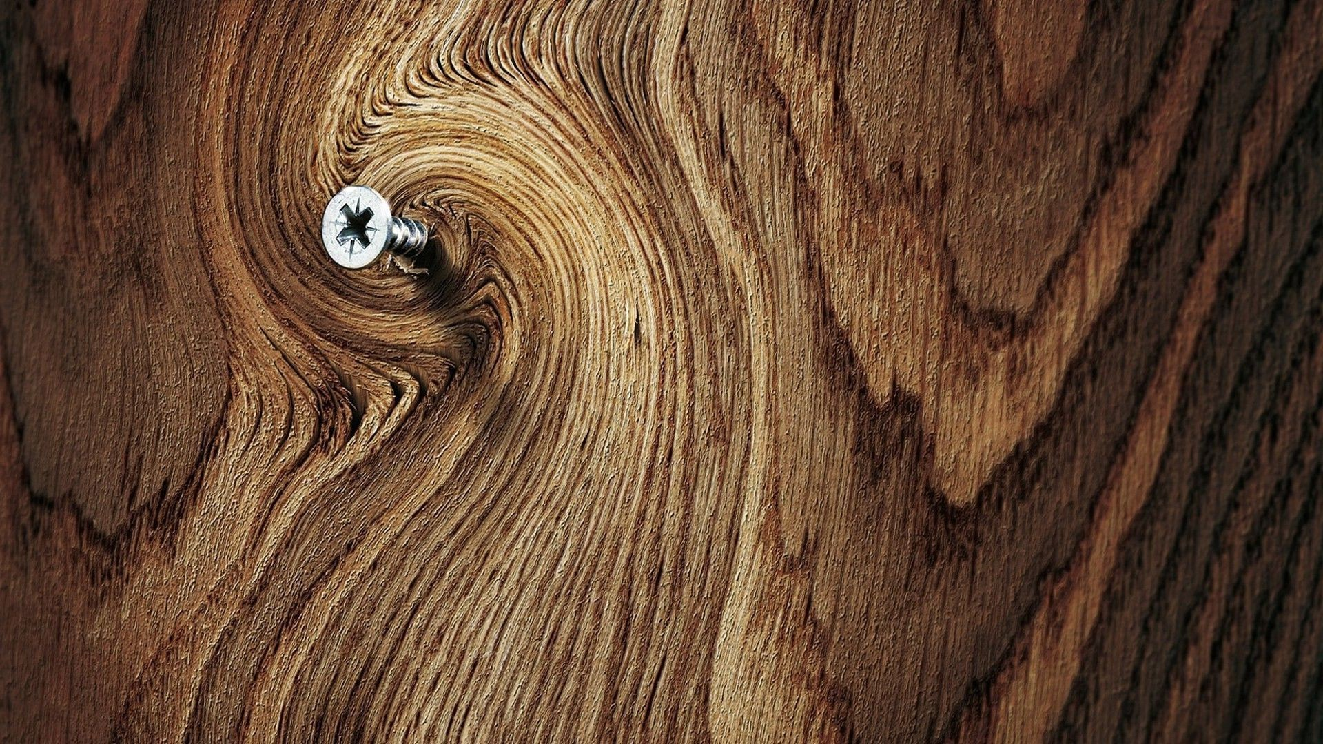 High Resolution Wood Tree Wallpaper 1920?1080 Full Size .