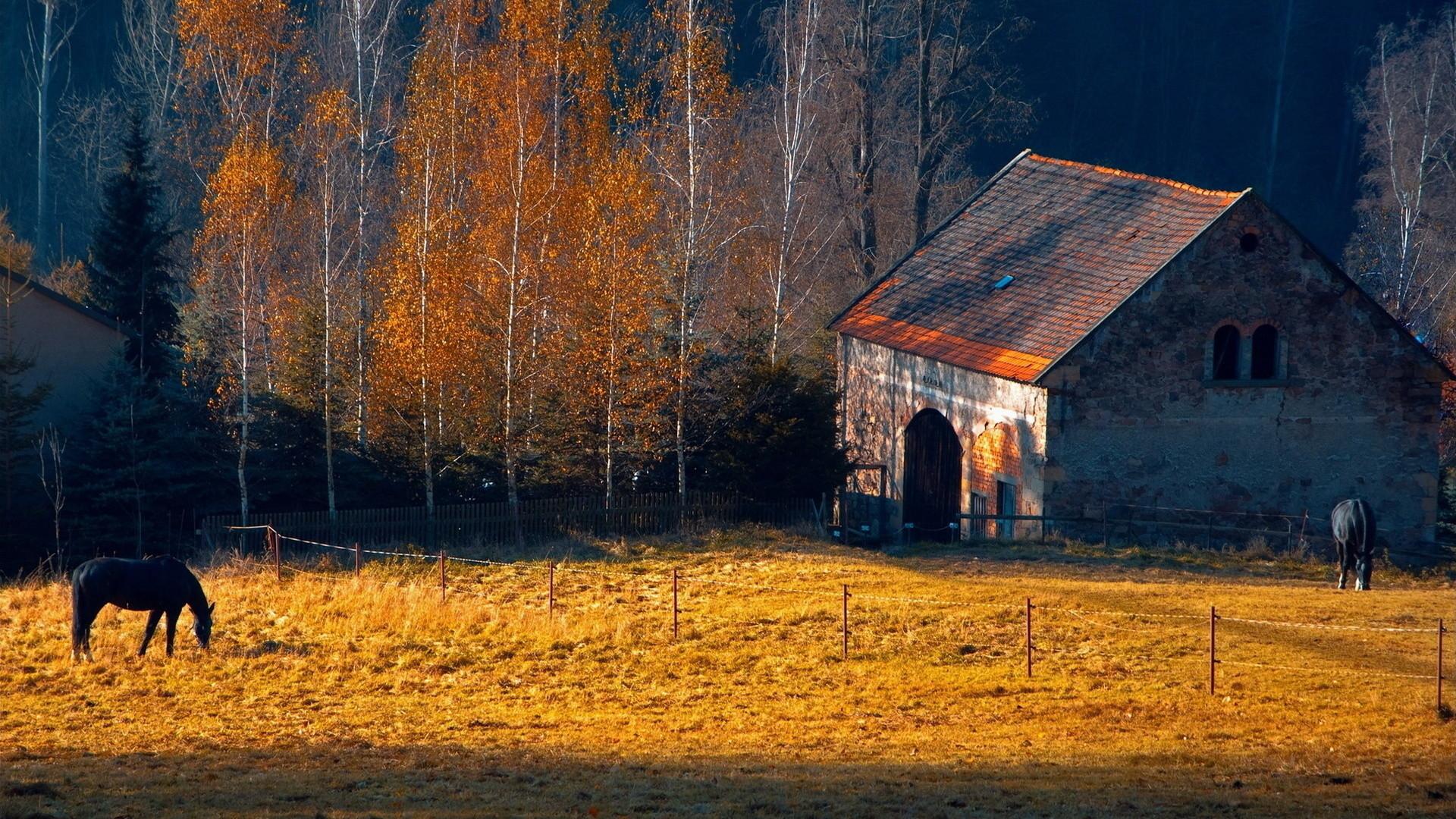 Horses rustic farm barn landscapes buildings autumn fall trees wallpaper |  | 31714 | WallpaperUP