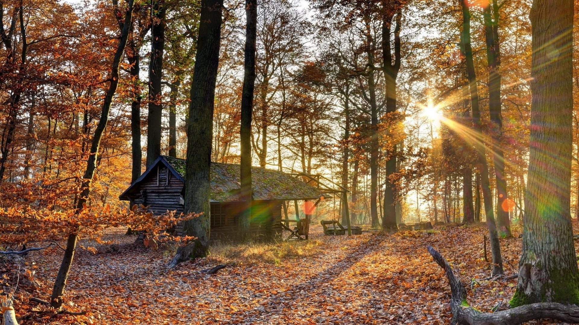 Trees – Landscape Rustic Tree Cabin Nature Autumn Forest Woods Hd Green  Wallpaper Free Download for