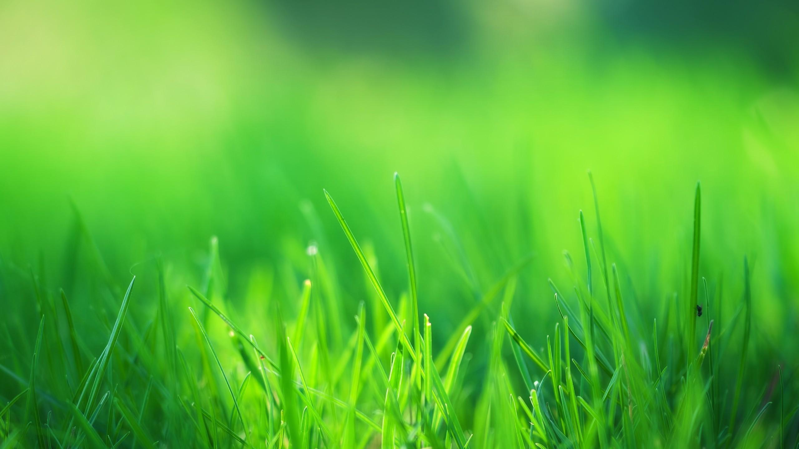 Green Grass – Wallpaper – Wallpaper Style