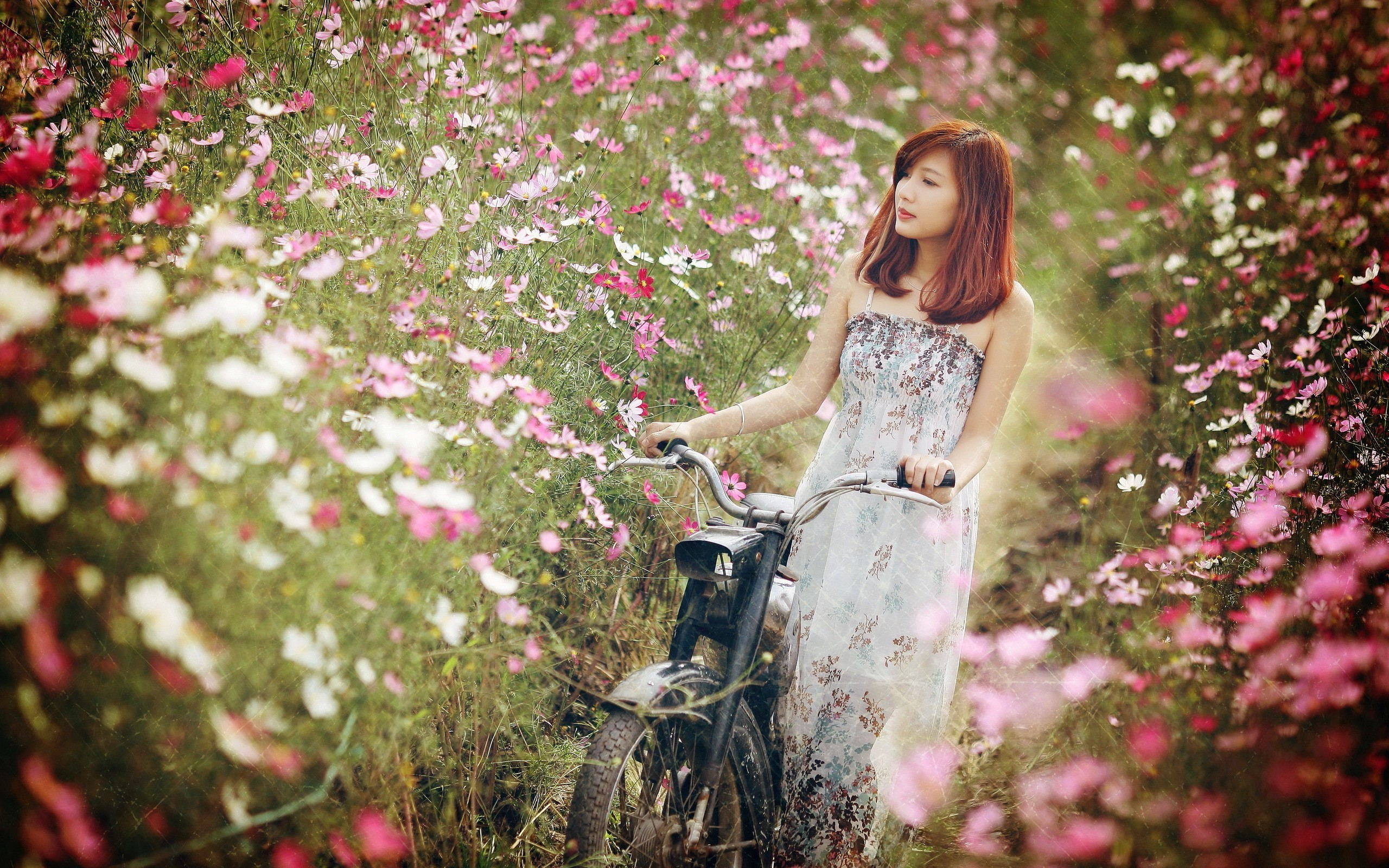 nature, Asian, Motors, Flowers Wallpapers HD / Desktop and Mobile  Backgrounds