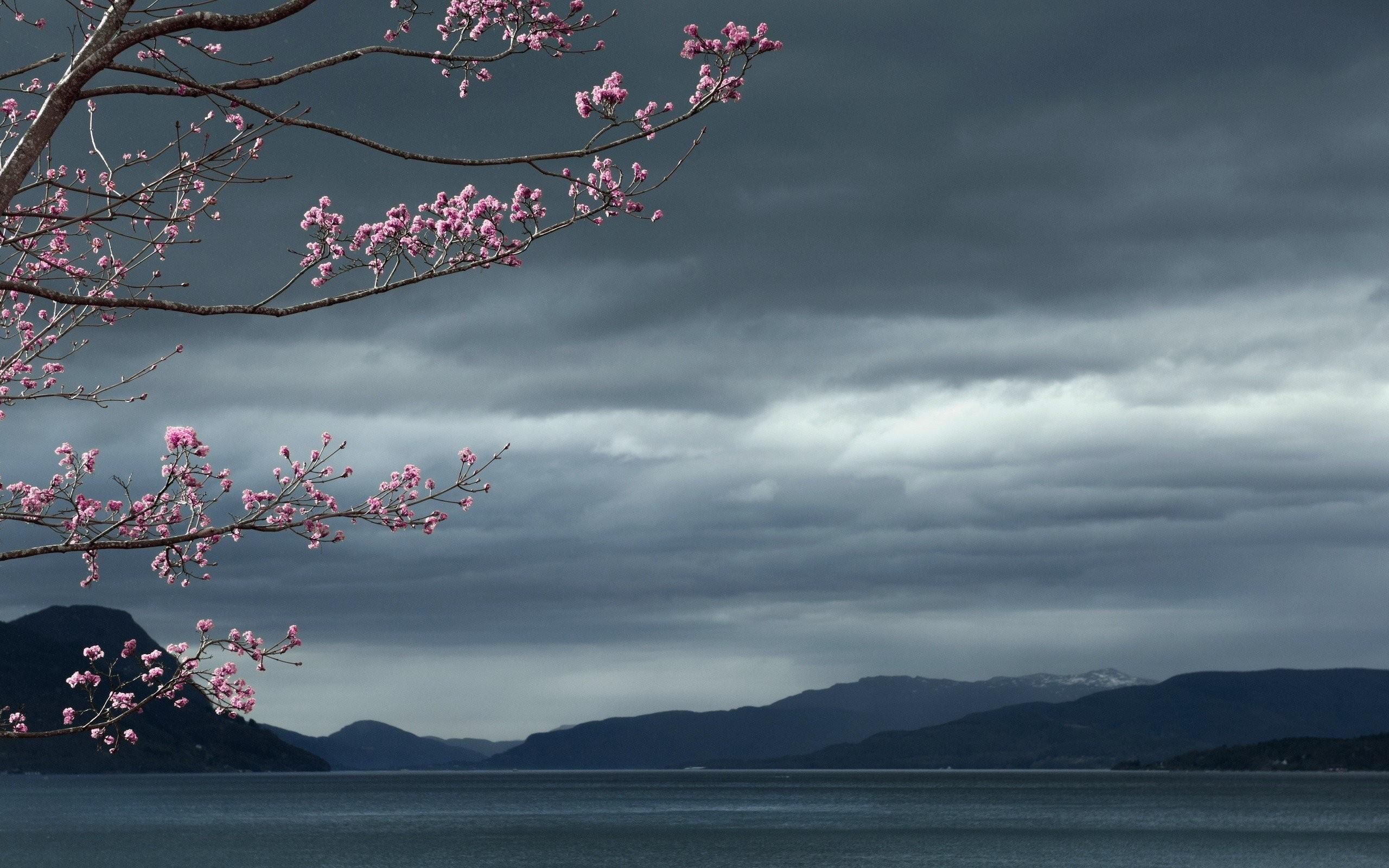 Lake Twitter Tree Flowerss Cherry Blossom