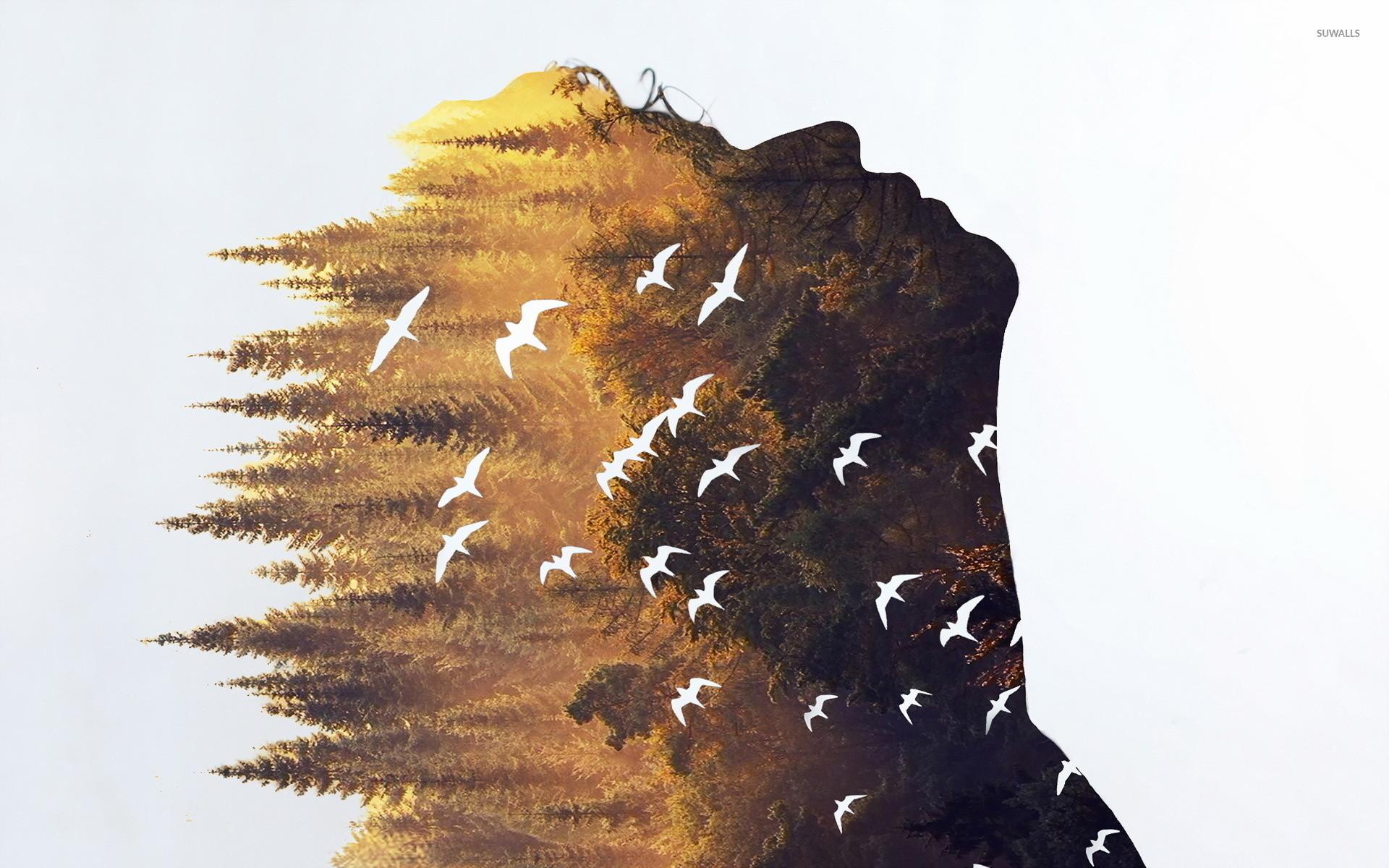 Forest in a silhouette wallpaper jpg