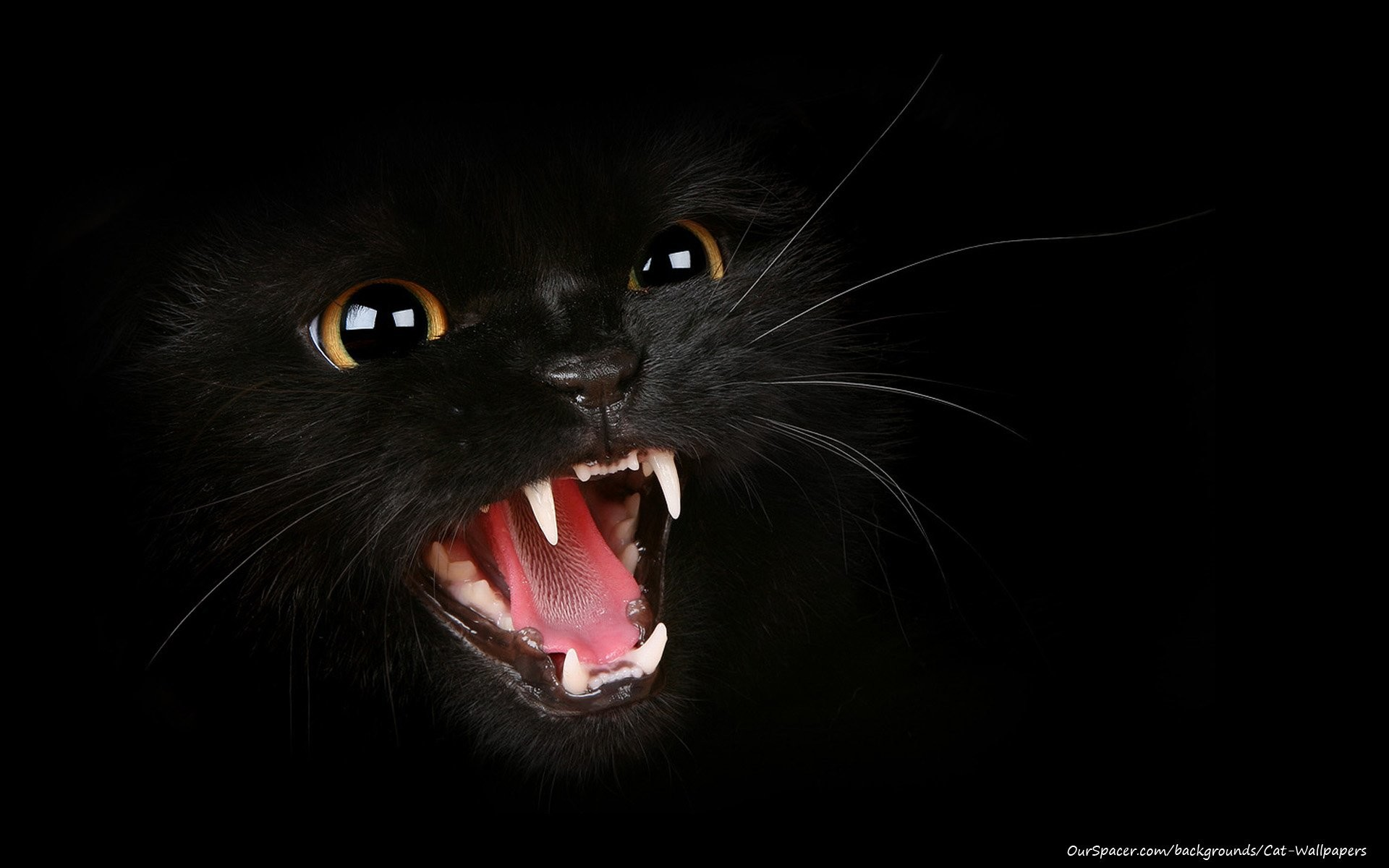 Black Cat On Background