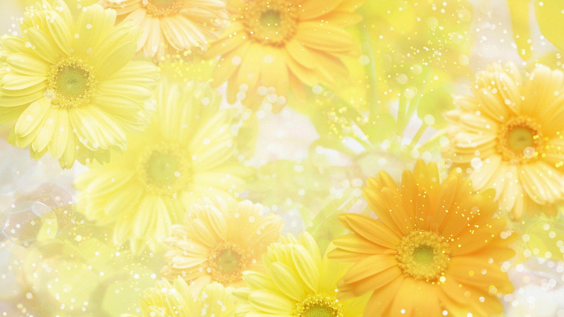 cool bright yellow flower HD wallpapers