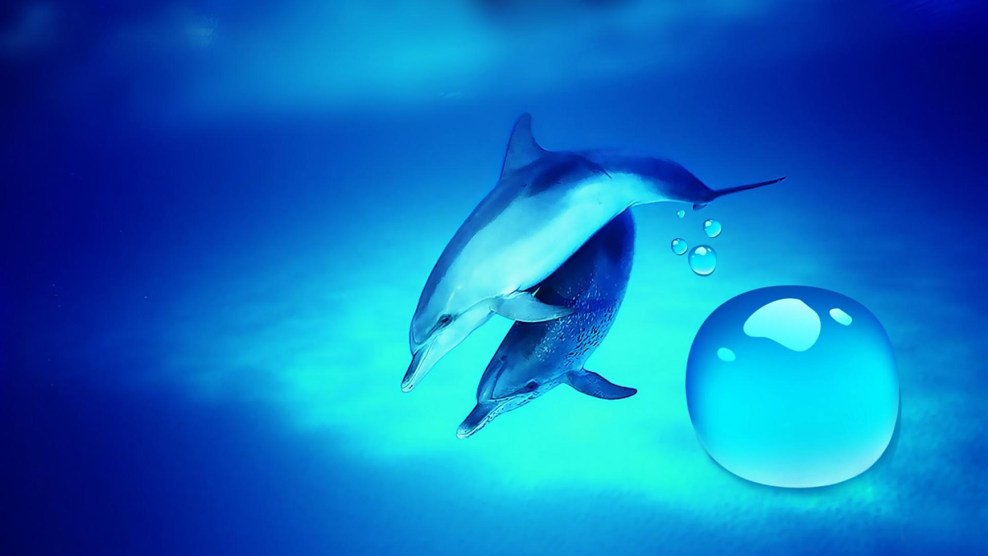 Free Dolphin Wallpapers For Desktop Wallpaper Dolphin Pictures Wallpapers  Wallpapers)