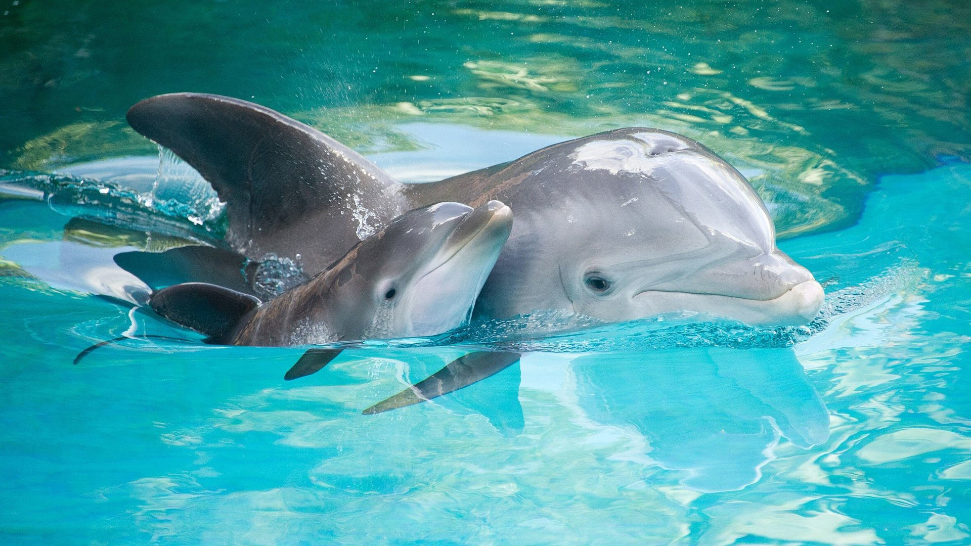 Pink Baby Dolphin