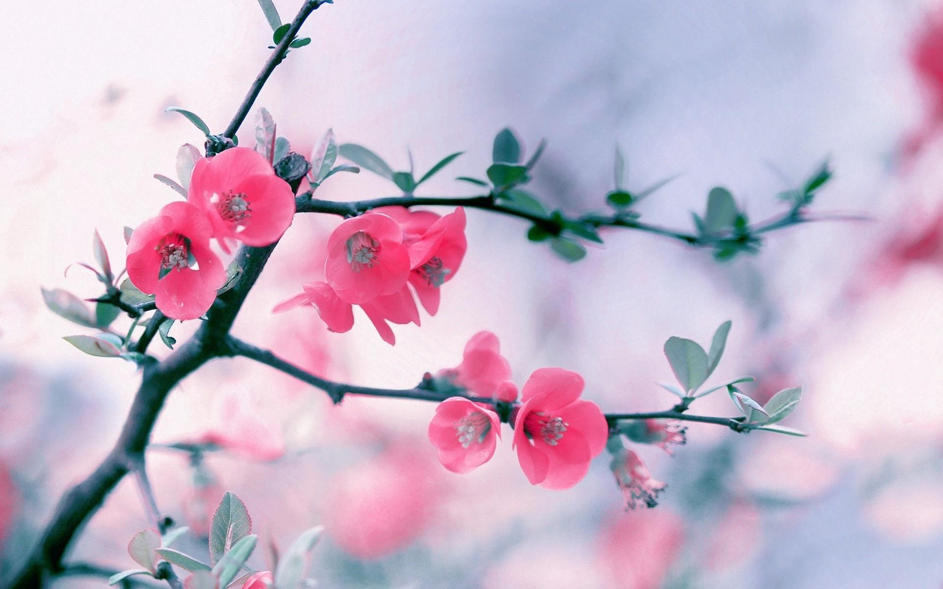 Nice Pink Flower Wallpaper