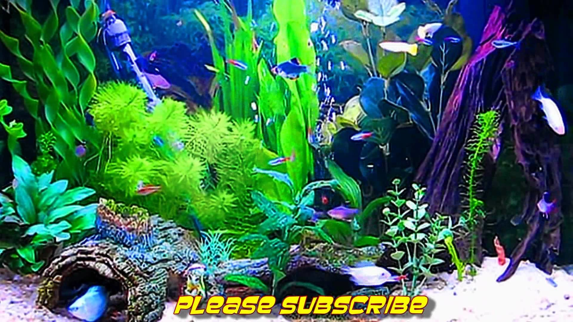 Amazing HD Aquarium ScreenSaver (Free) Windows and Android – YouTube