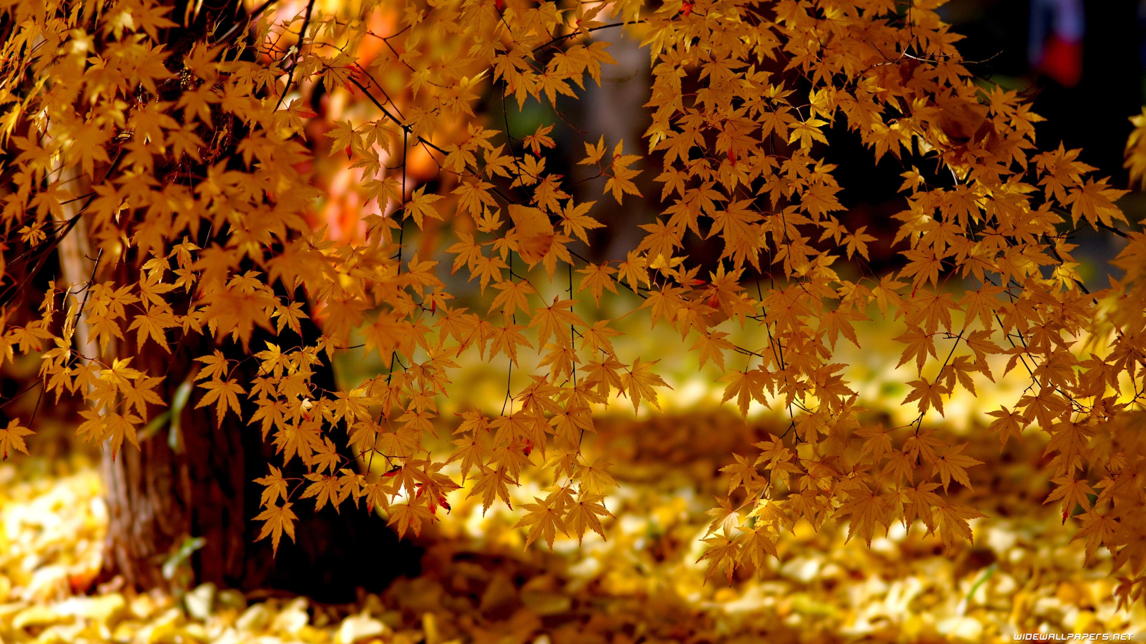 Autumn wallpapers 4K …