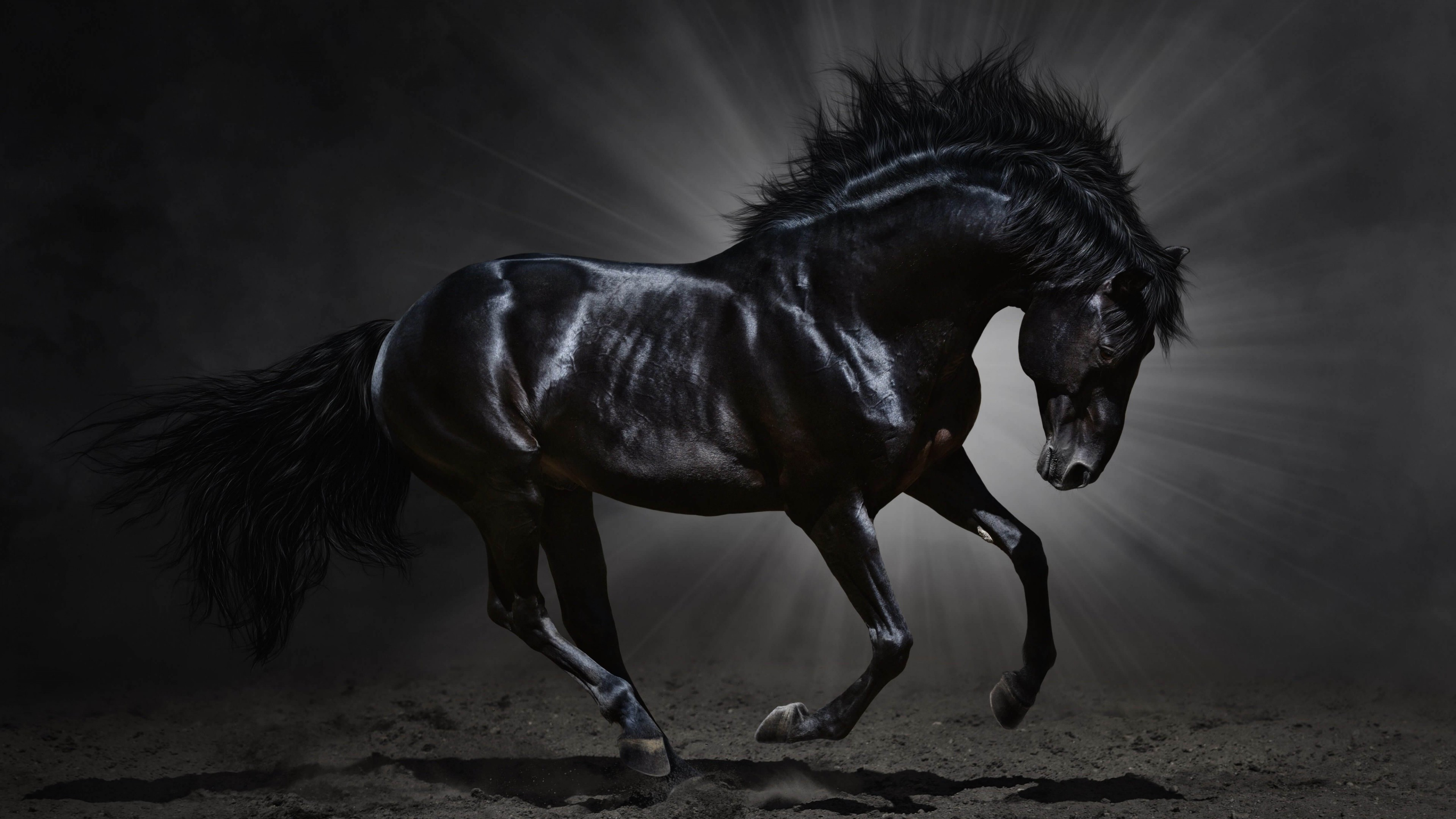 Black Horse Desktop Wallpaper | Download Dark Horse HD wallpaper for 4K  3840 x 2160 –