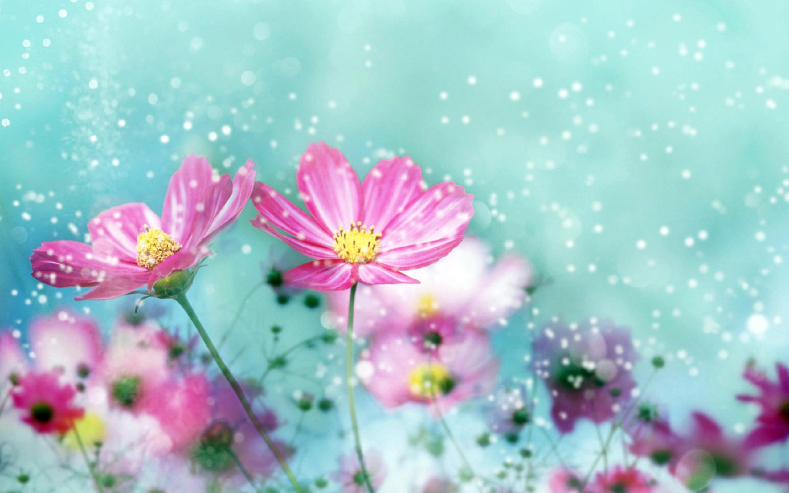 … cute pretty flowers wallpapers wallpapersafari …