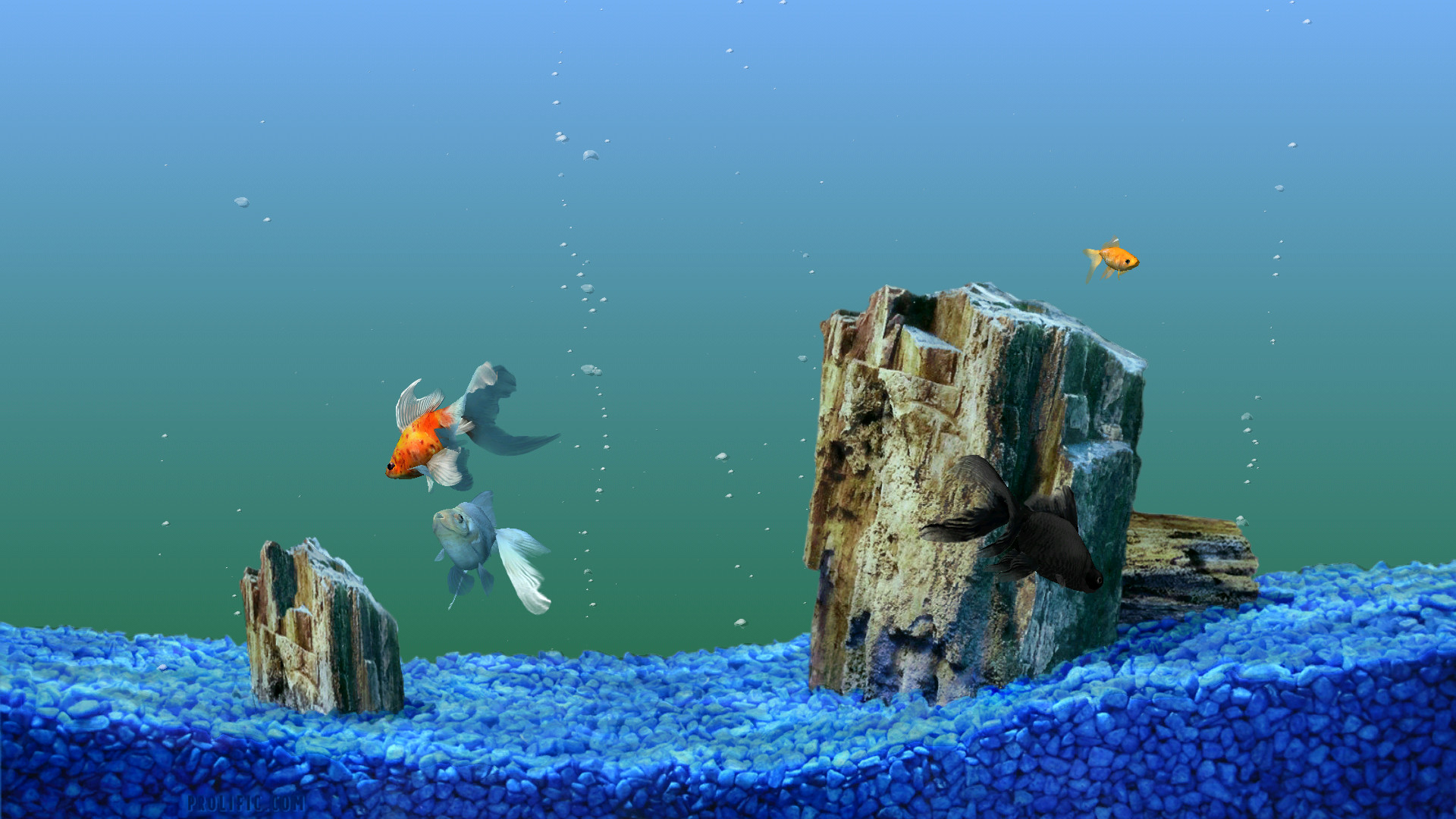 Which One To Choose: Animated Or Static Picture Fish Tank Background : Fish  Tank Wallpaper