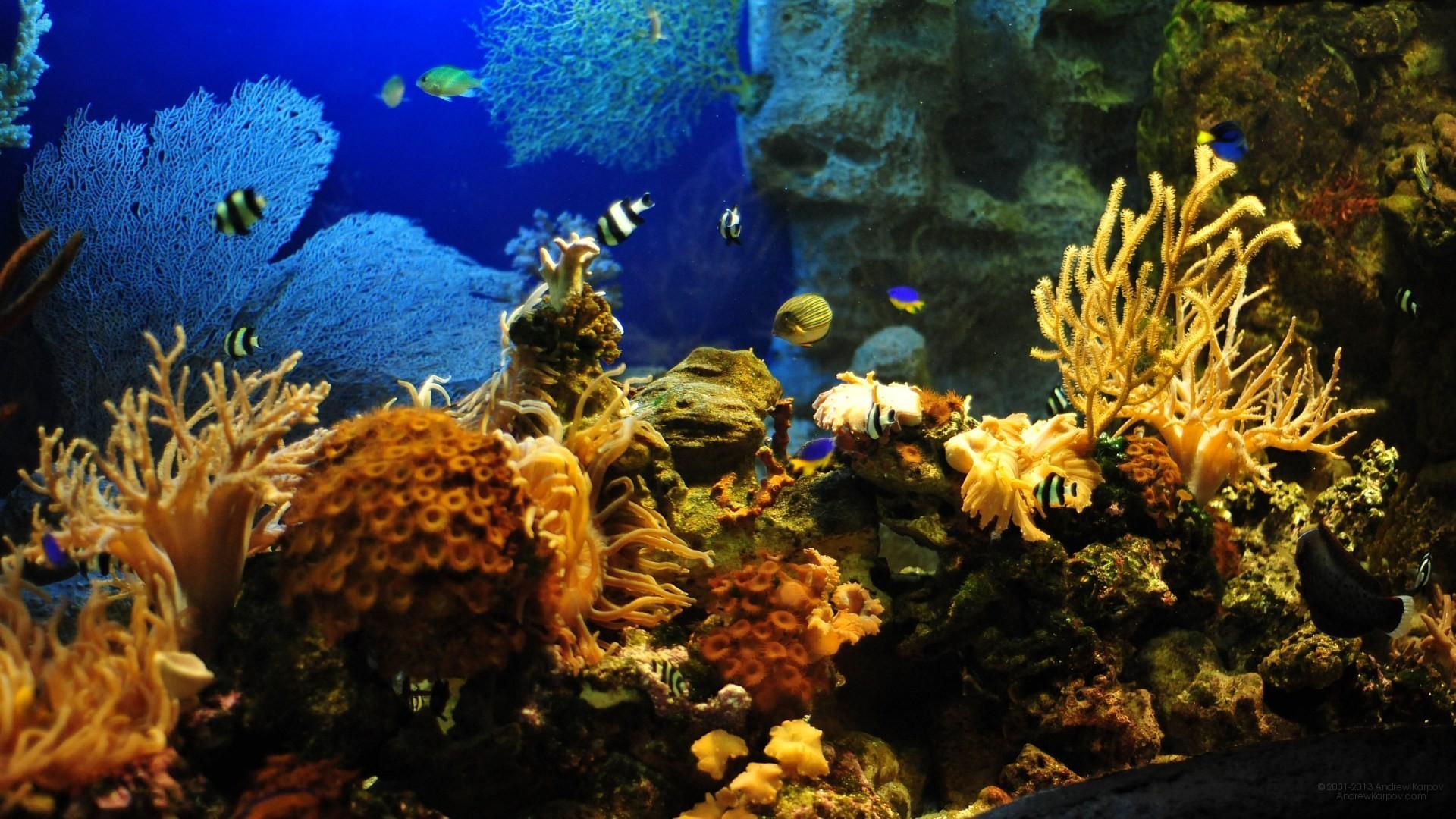 Animated aquarium wallpaper free download – photo#24