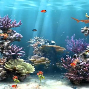 Moving Aquarium