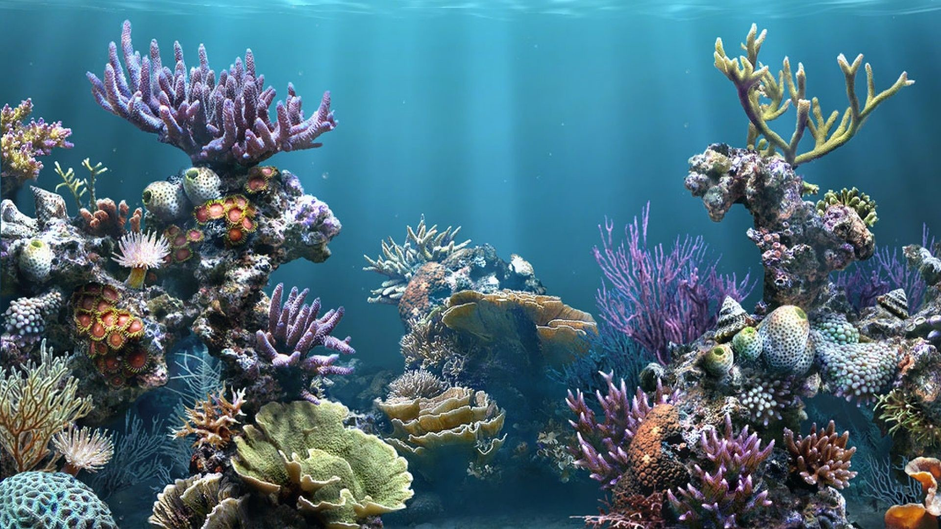 Fish Aquarium Wallpaper For Mobile : Fish tank backgrounds download u2013  wallpapercraft