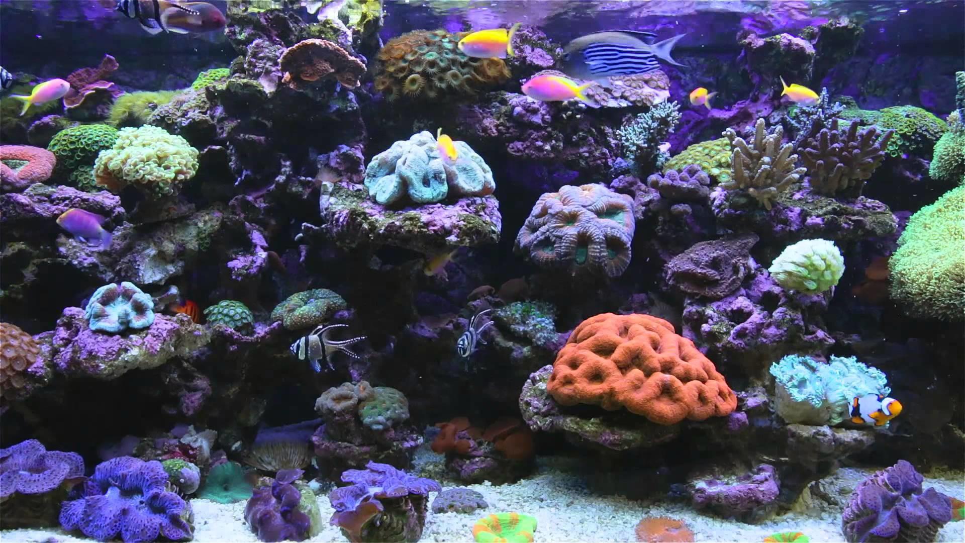 Aquarium backgrounds download free pixelstalk.net
