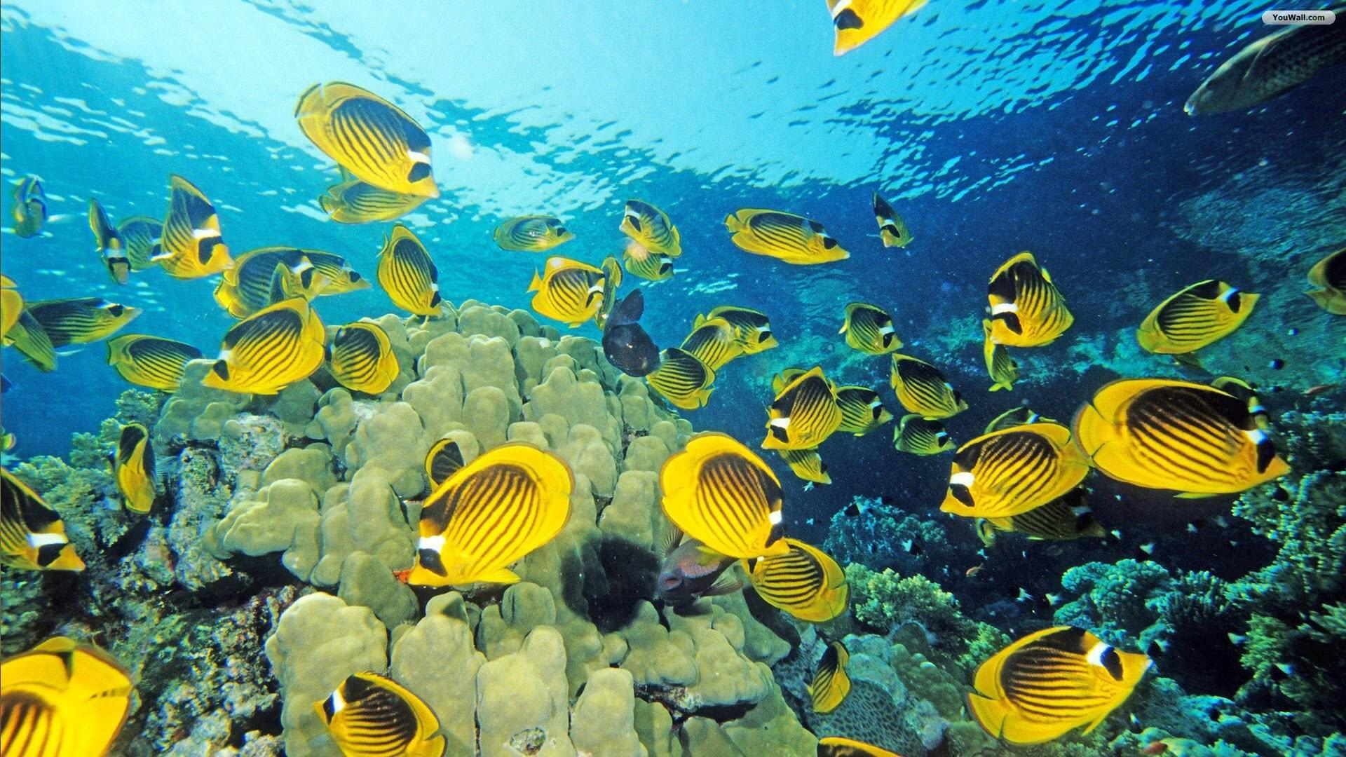Aquarium Wallpaper Hd : Fish wallpaper hd 801956 walldevil