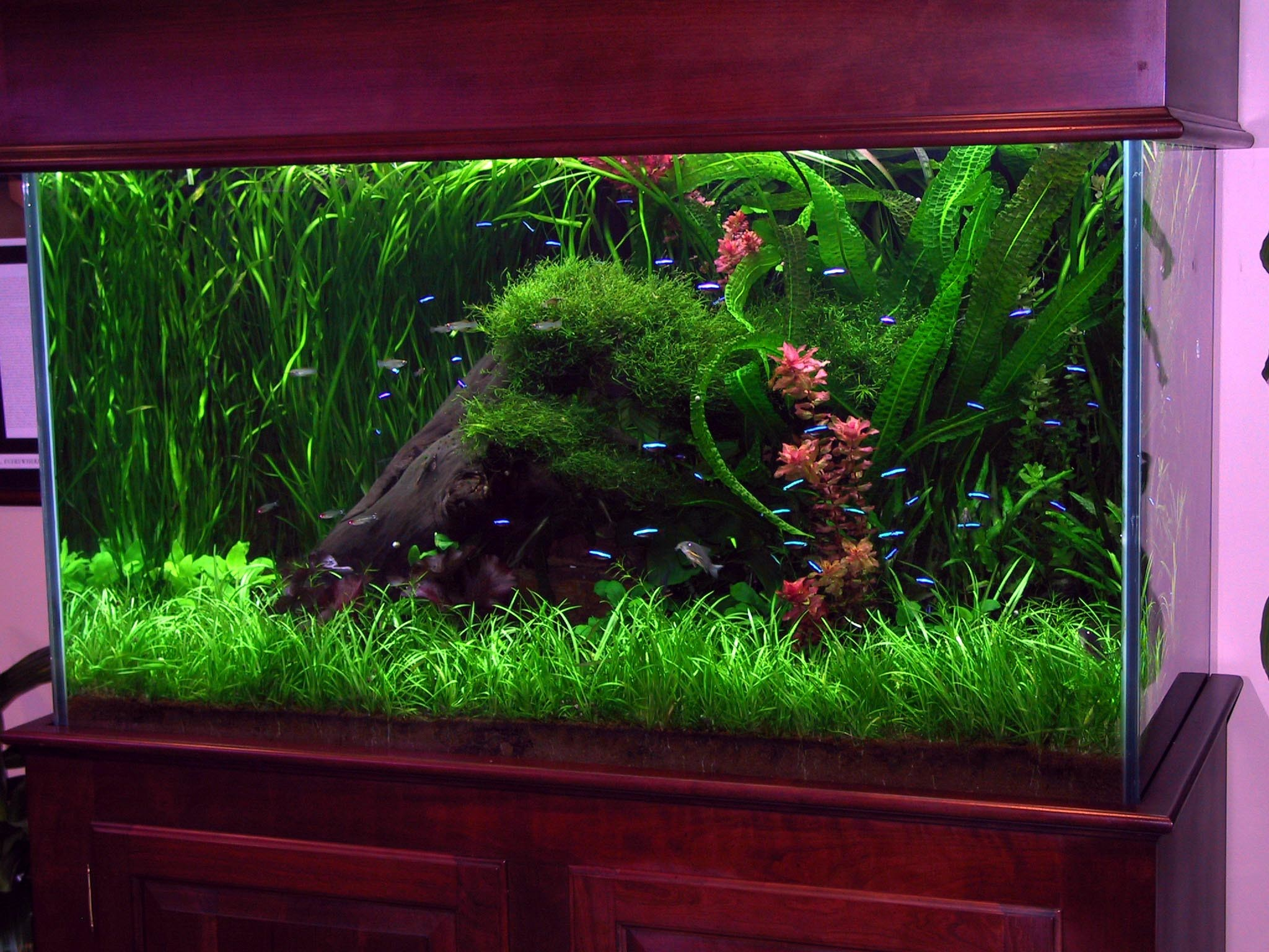 Full Size of Fish Tank Can Betta Fish In Tank With Other Cycling Food  Artificial Tanks …