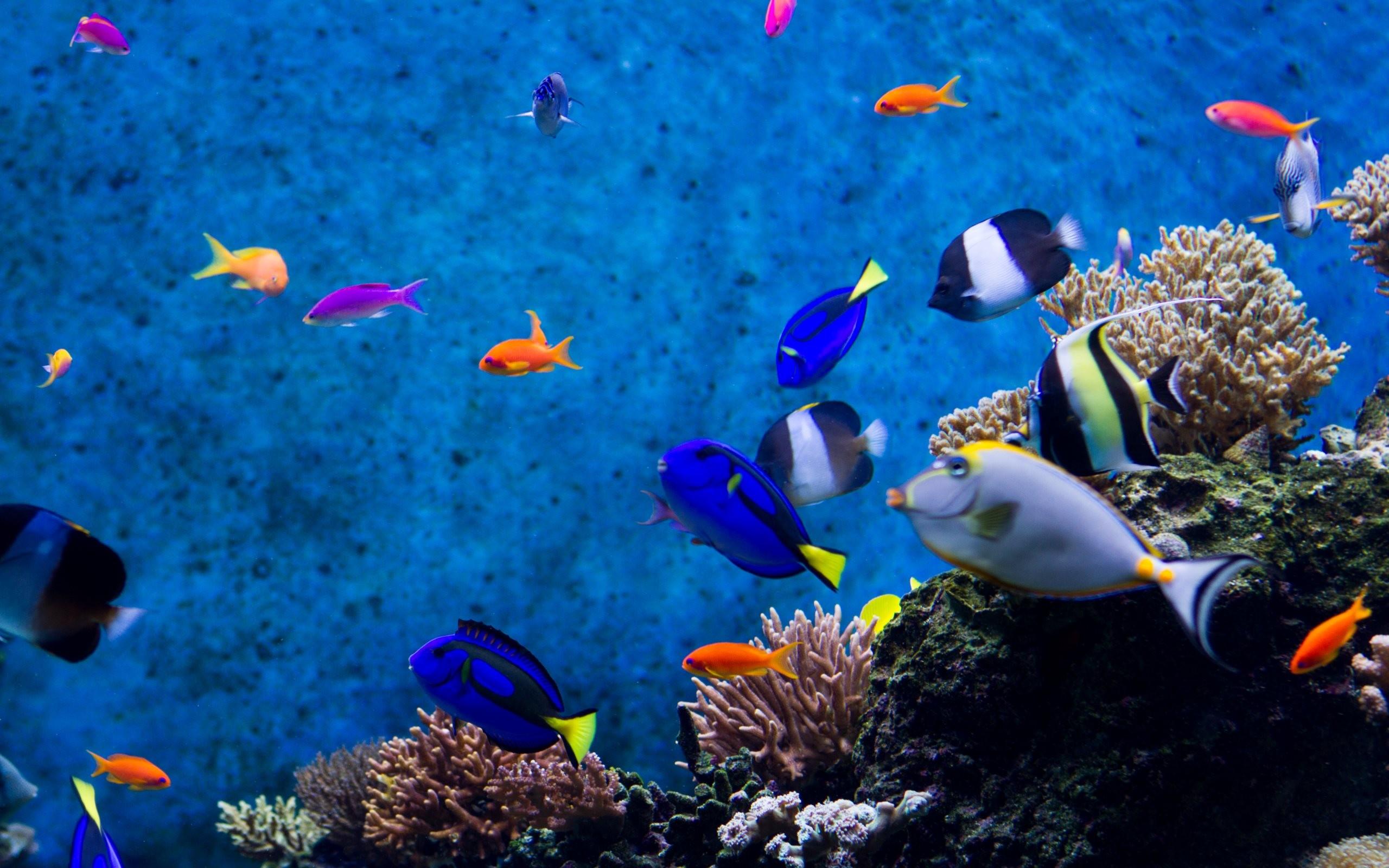 Aquarium fishes hd wallpapers · 4k