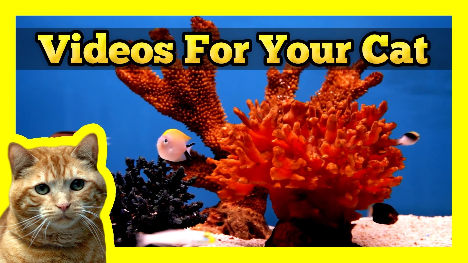 Videos for your Cat – Fish Tank (Trigger Fish, Yellow Wrasse, Domino  Damsel) – YouTube