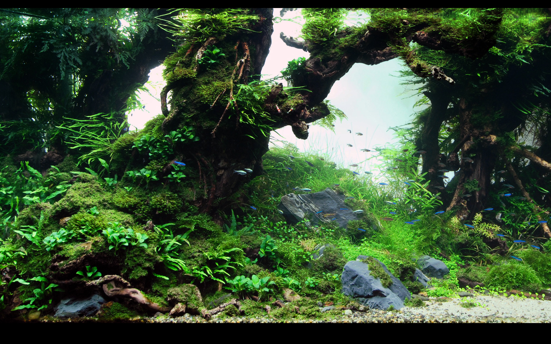 Animated Wallpaper And Desktop Backgrounds Aquarium Free Download : Tank  background wallpaper wallpapersafari