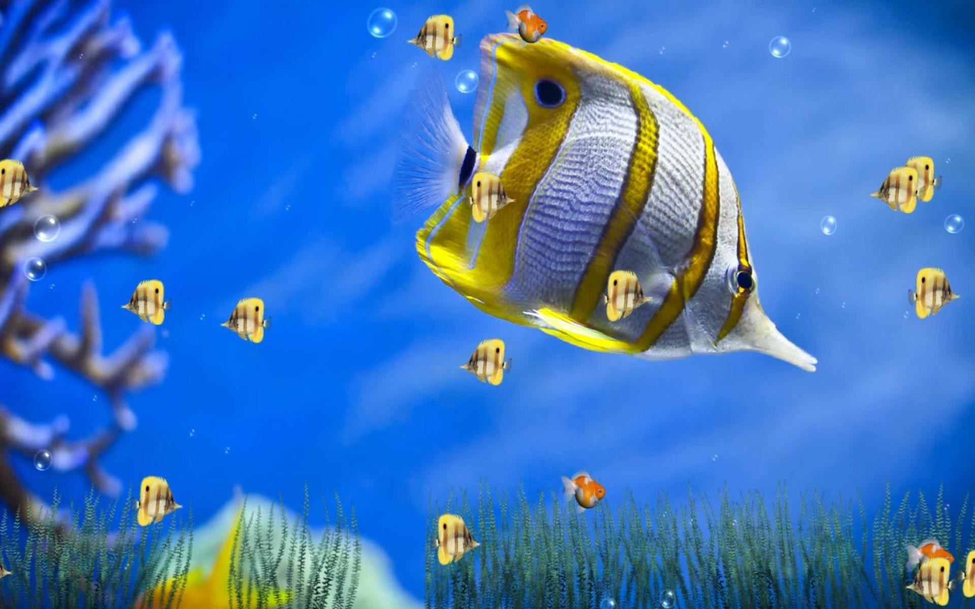 Marine Life Aquarium is a unique Animated Wallpaper that will bring the  ocean world to your computer screen. With 4 wonderful and beautiful scenes  to bring …