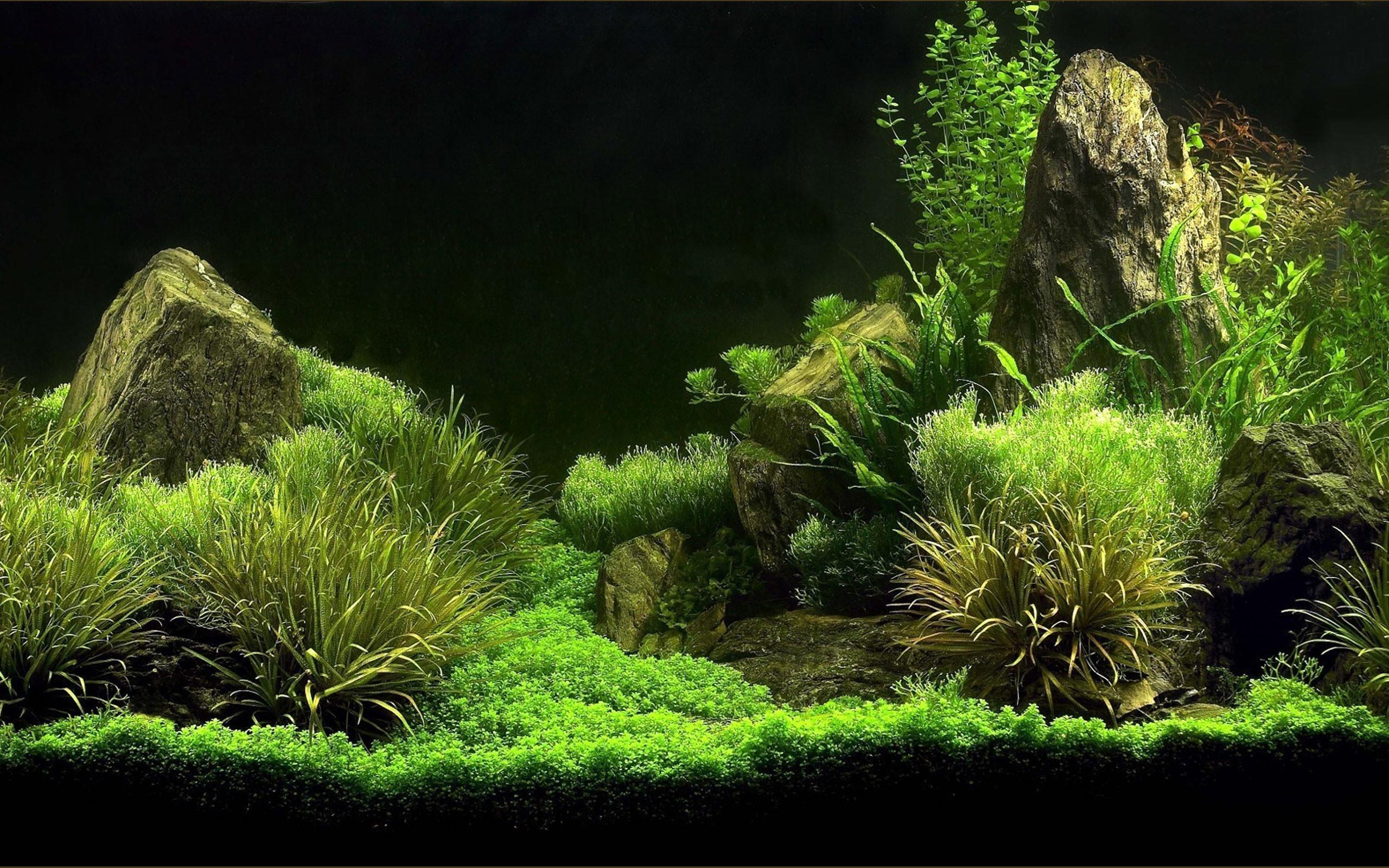 3D Aquarium Background. Source