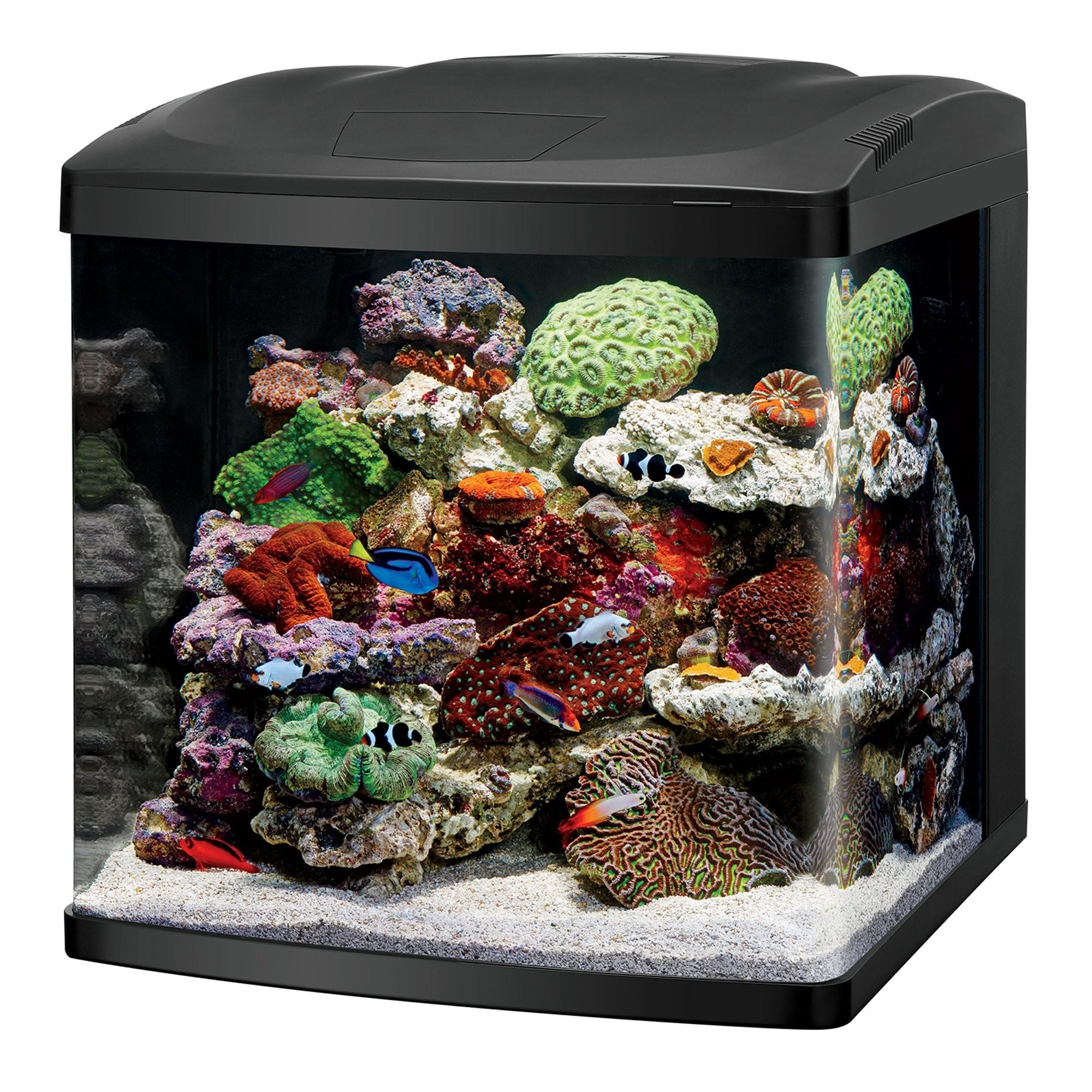 Full Size of Fish Tank Desk Fish Tank Aquarium Best Office For Center Tanks  Saltwater Freshwater …
