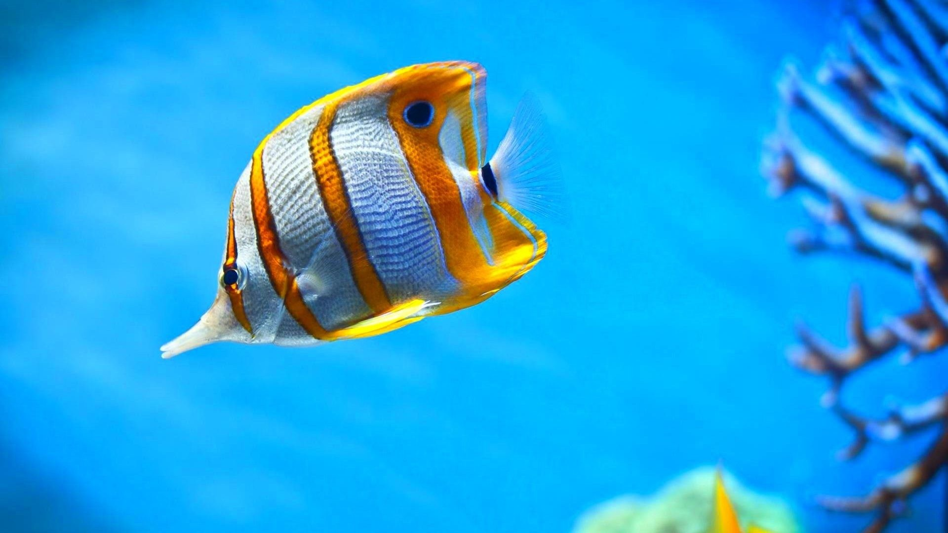 Fish Tag – Sea Underwater Nature Sealife Fish Fishes Ocean Full Hd Images  for HD 16