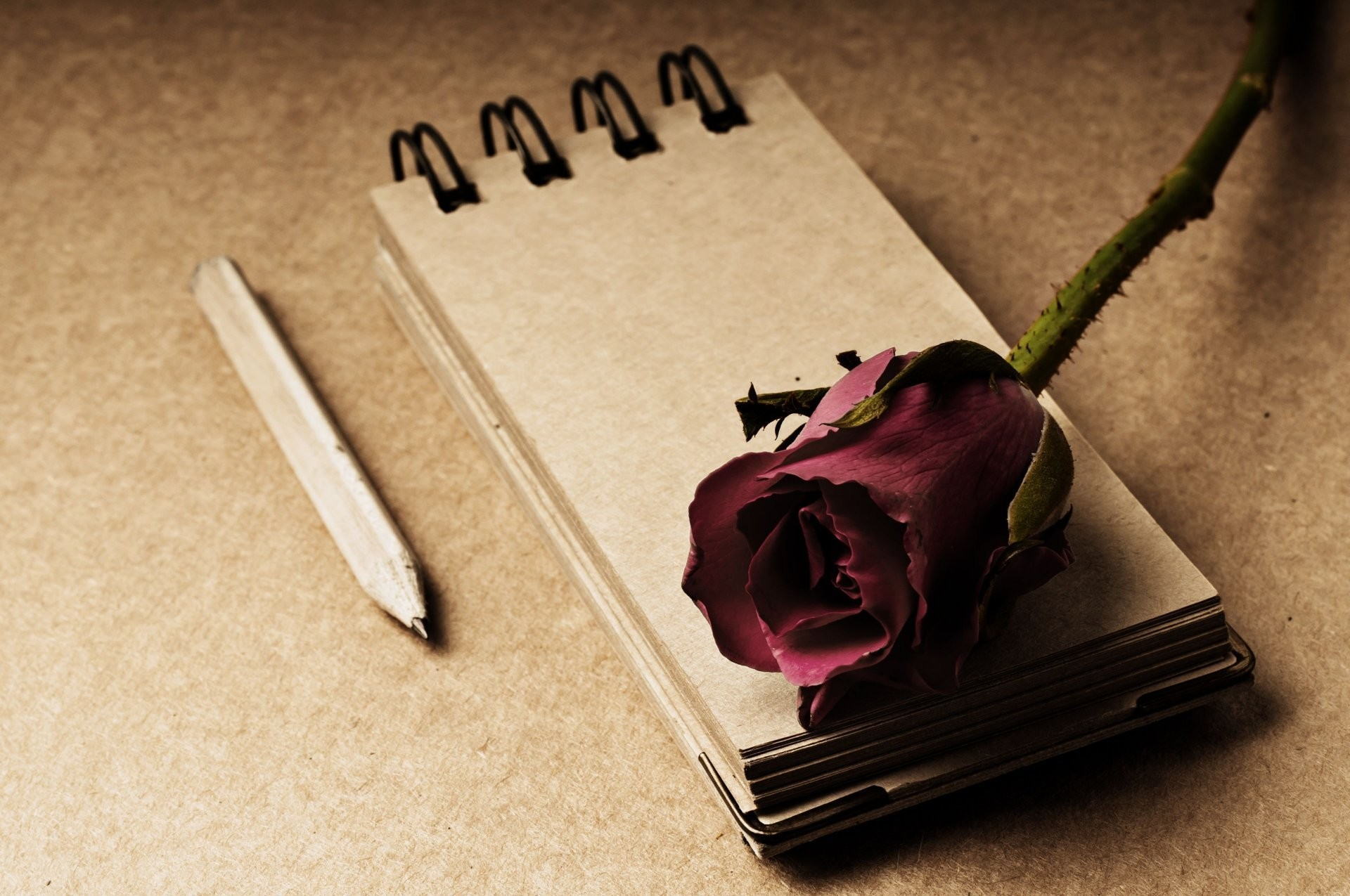 style notes notebook flower flower rose red pencil background widescreen  full screen widescreen hd wallpapers