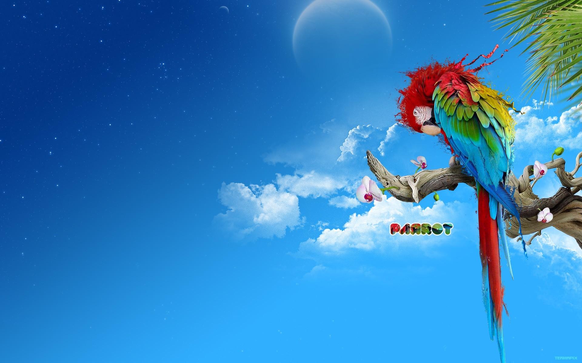parrot hd 1080p desktop wallpaper 0019