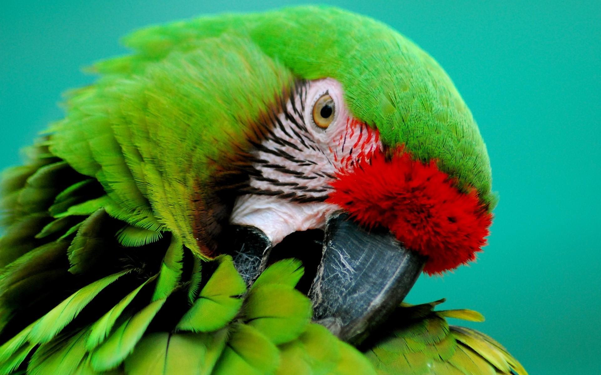 parrot hd 1080p desktop wallpaper 0009