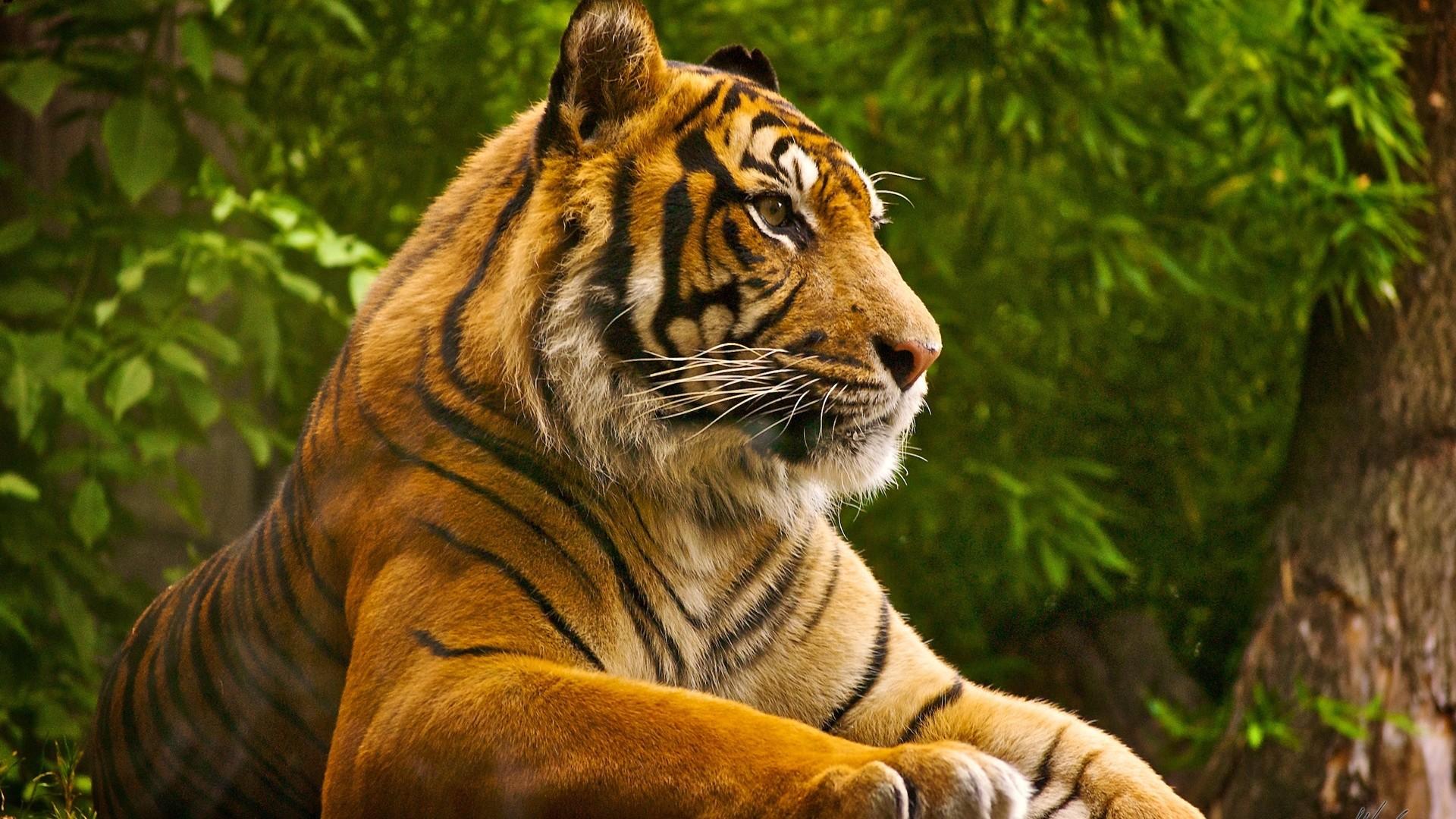 Clemson Tigers Desktop Wallpaper – www.wallpapers-in-hd.com