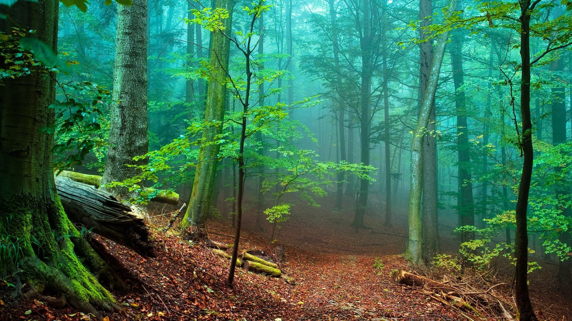 Nature Trees Forest Woods Magic Wallpaper 1920×1080 1080P .