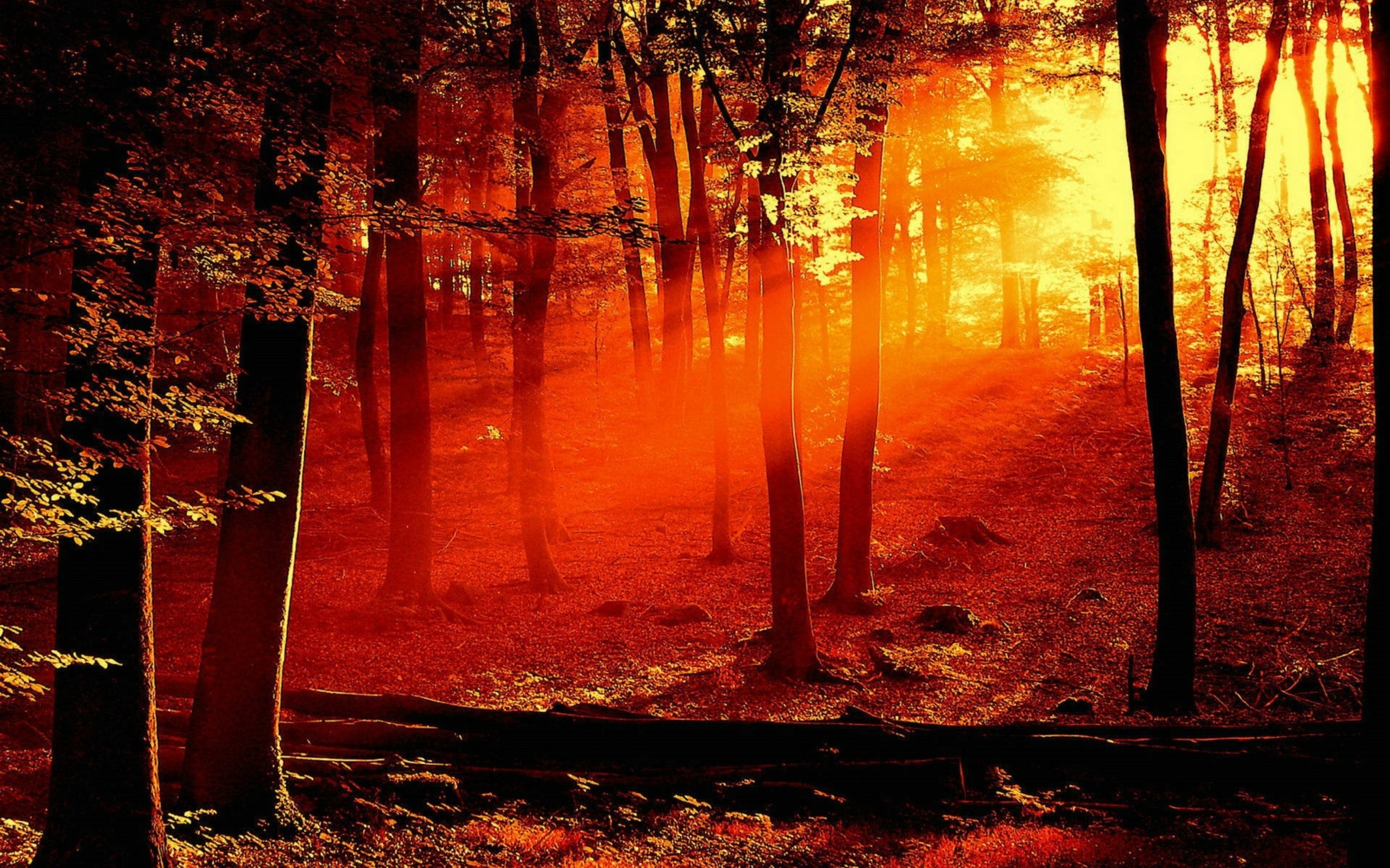 Forest Fire Wallpapers, Forest Fire Myspace Backgrounds, Forest Fire .