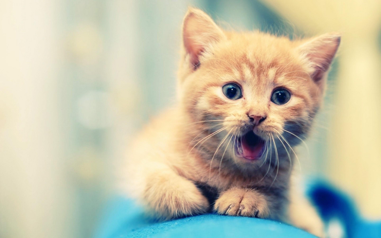 Cute-Kitty-Animal-Wallpaper-for-Girls